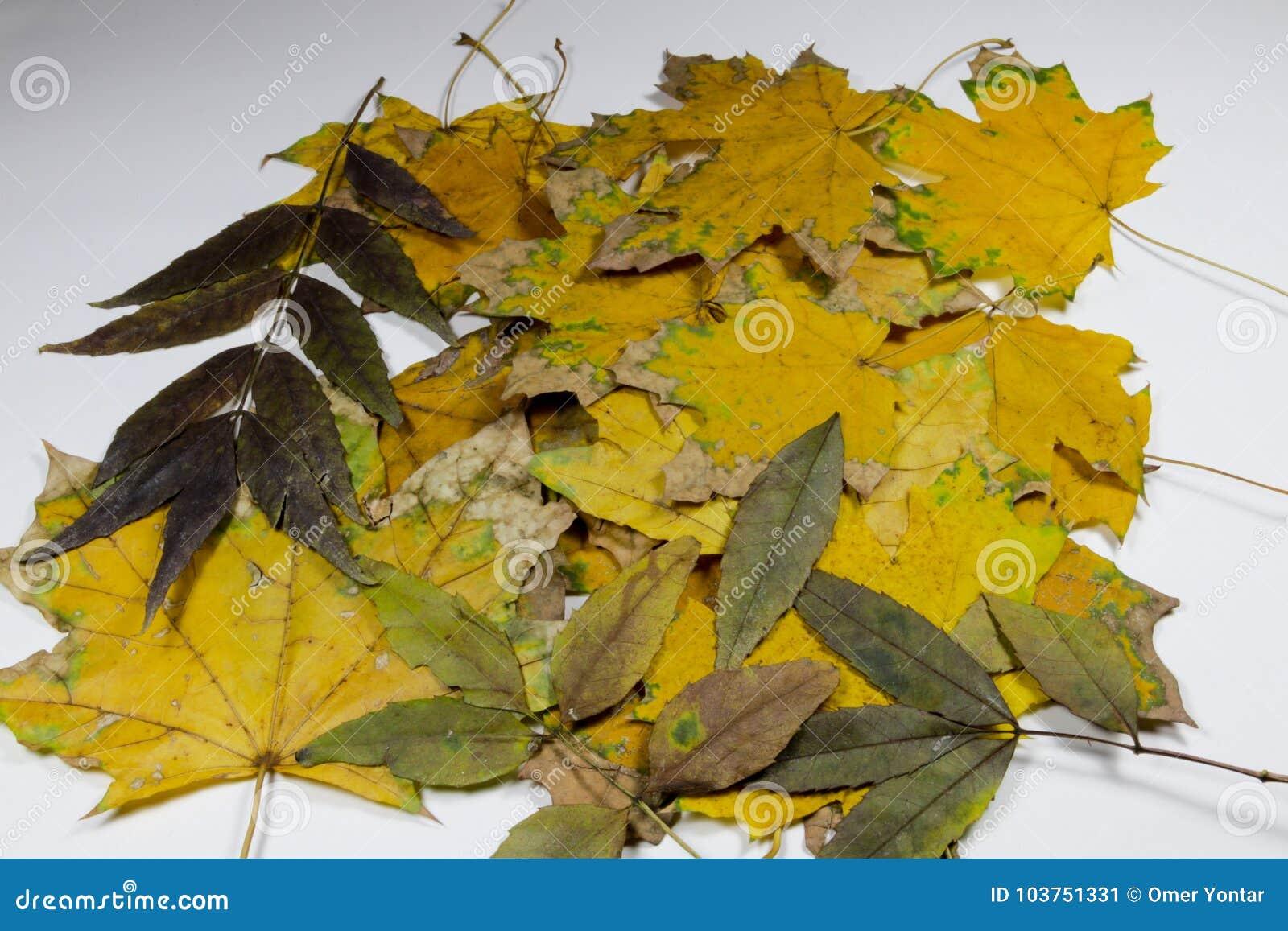 Hoja amarilla y verde