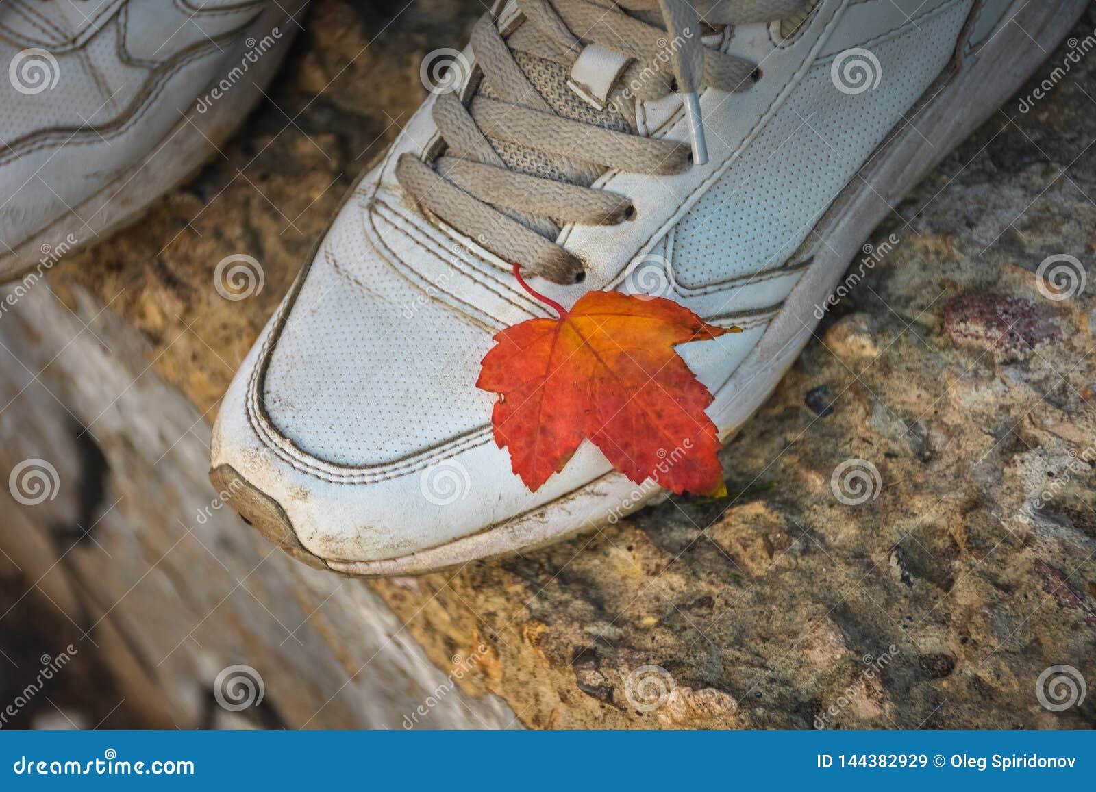 Hoja anaranjada en una zapatilla de deporte blanca, otoño del otoño