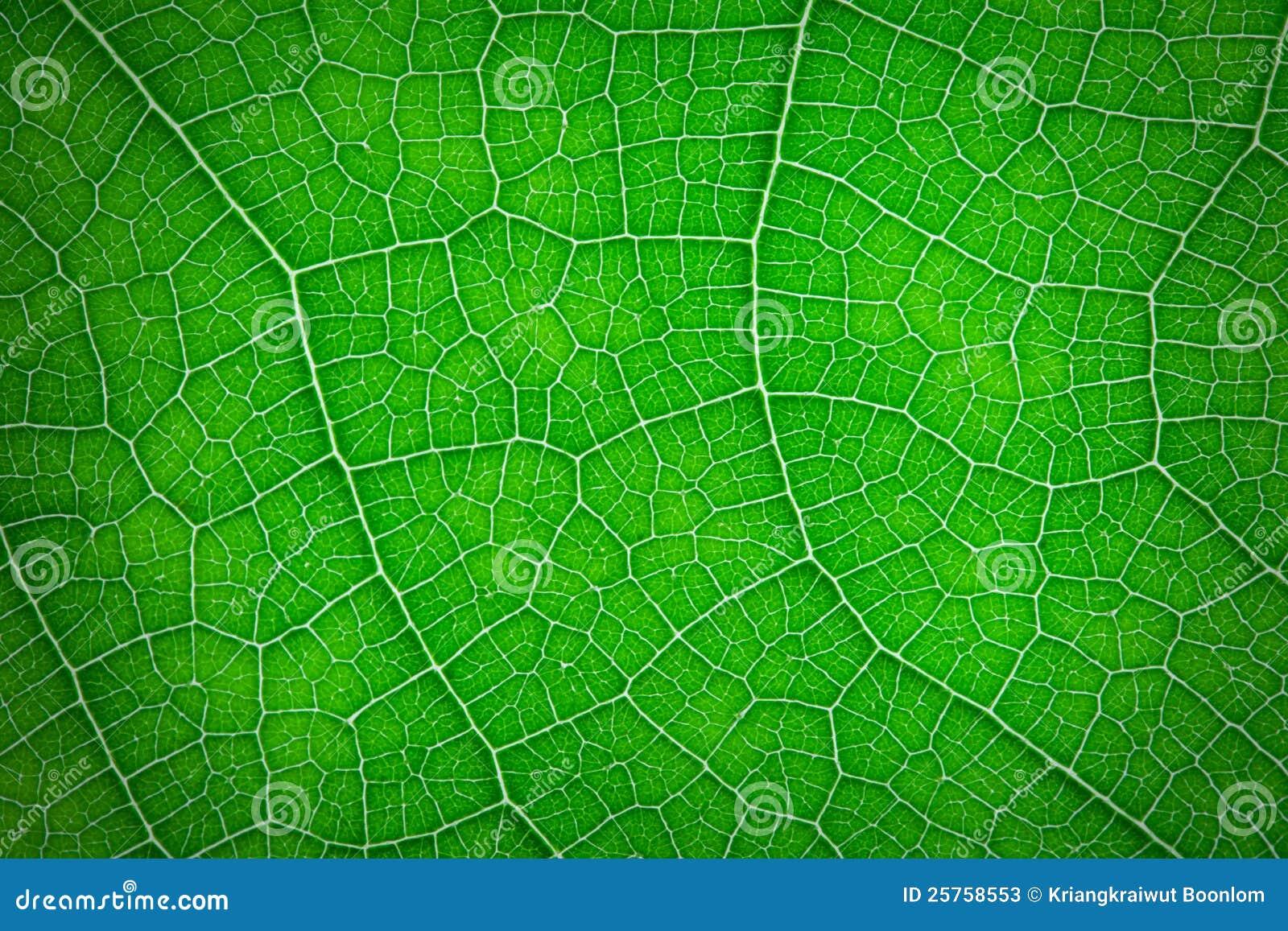Hoja cerrada para arriba del color verde fotos de archivo - Color verde hoja ...
