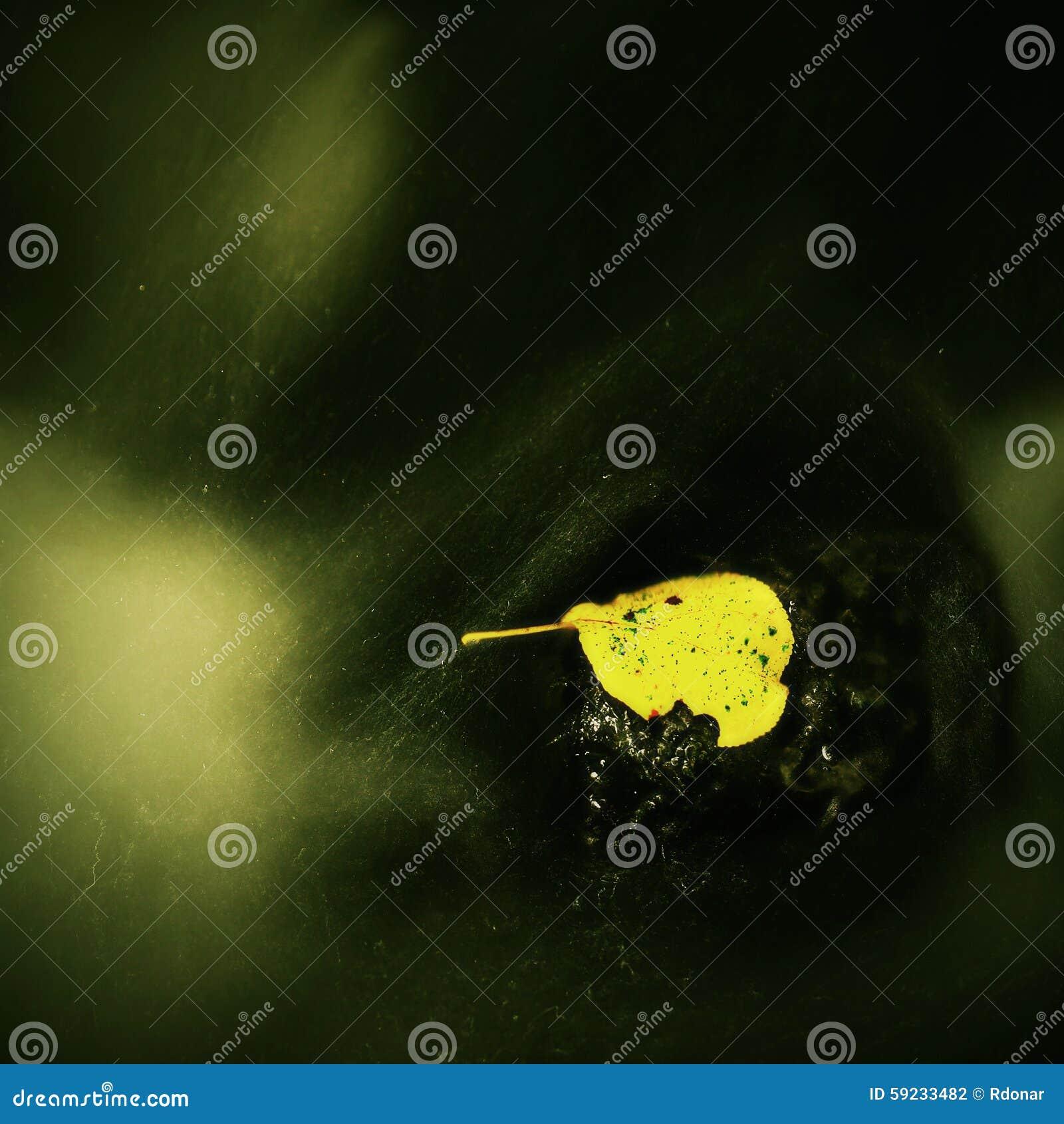 Download Hoja Colorida Del Otoño Náufrago En Piedra Mojada Del Deslizador En Corriente Foto de archivo - Imagen de deslizador, enmascarado: 59233482