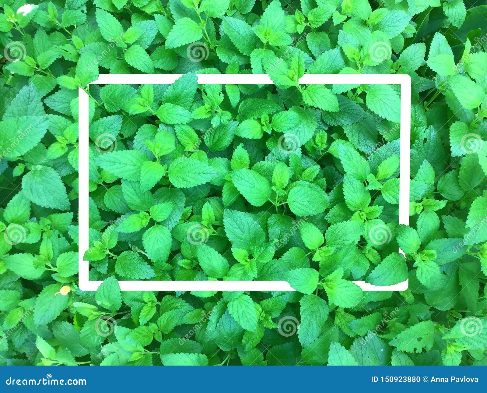 Hoja con el marco blanco, hoja verde abstracta, hoja verde minúscula, fondo verde natural