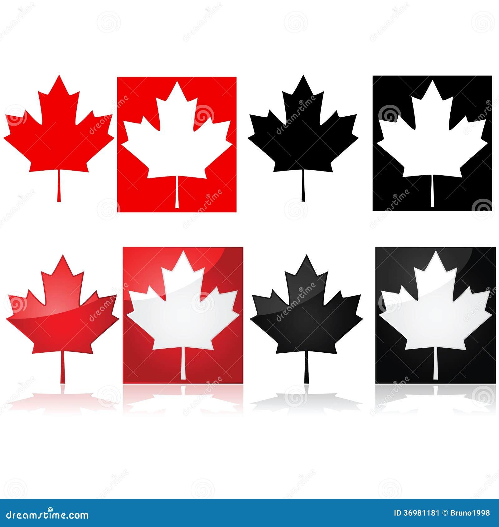 Hoja de arce canadiense imagen de archivo imagen 36981181 - Foglia canadese contorno foglia canadese ...