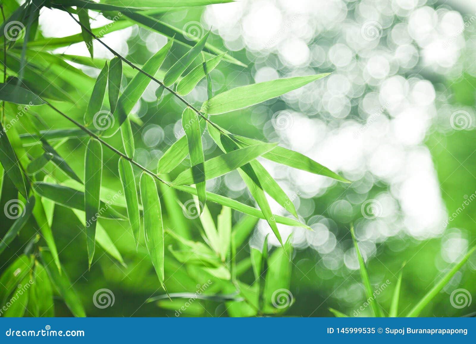 Hoja de bamb? y bokeh verde abstracto del fondo fondo blured, foco selectivo