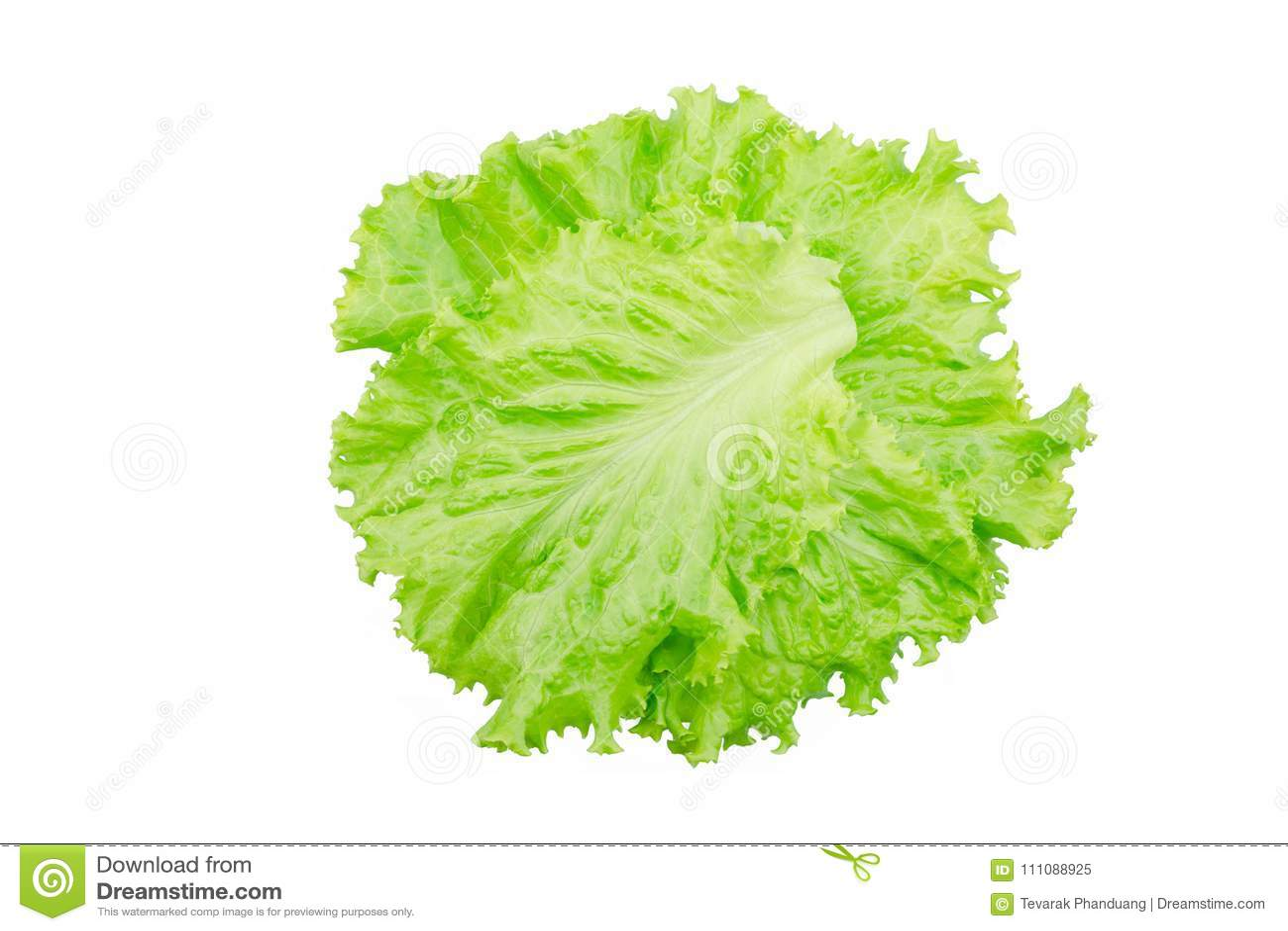 Hoja de la ensalada Lechuga aislada en el fondo blanco