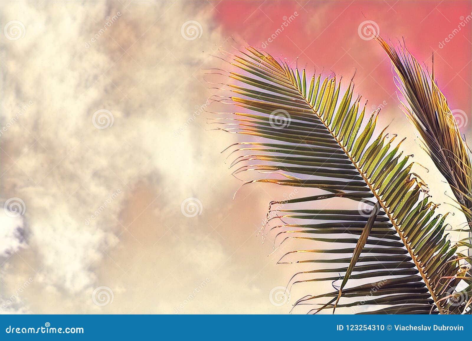 Hoja de la palmera de los Cocos en fondo del cielo El rosa entonó la hoja de palma en el cielo de la puesta del sol Ejemplo digit