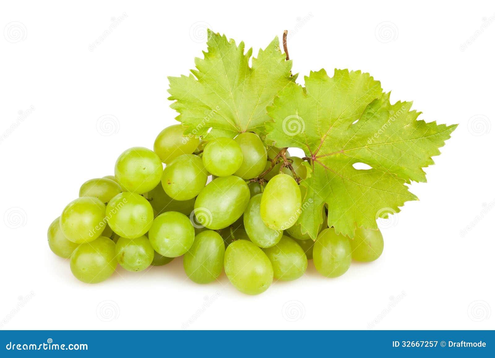 Hoja de las uvas blancas