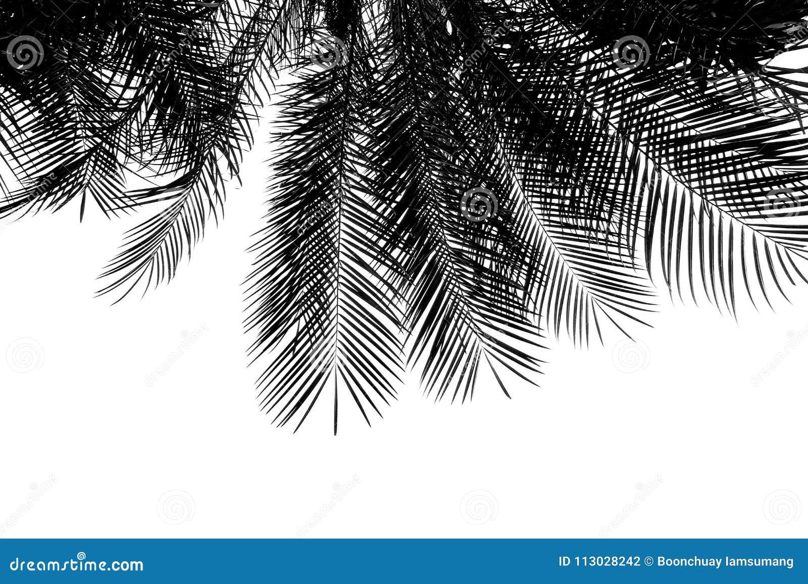 Hoja de palmas blanco y negro aislada en blanco