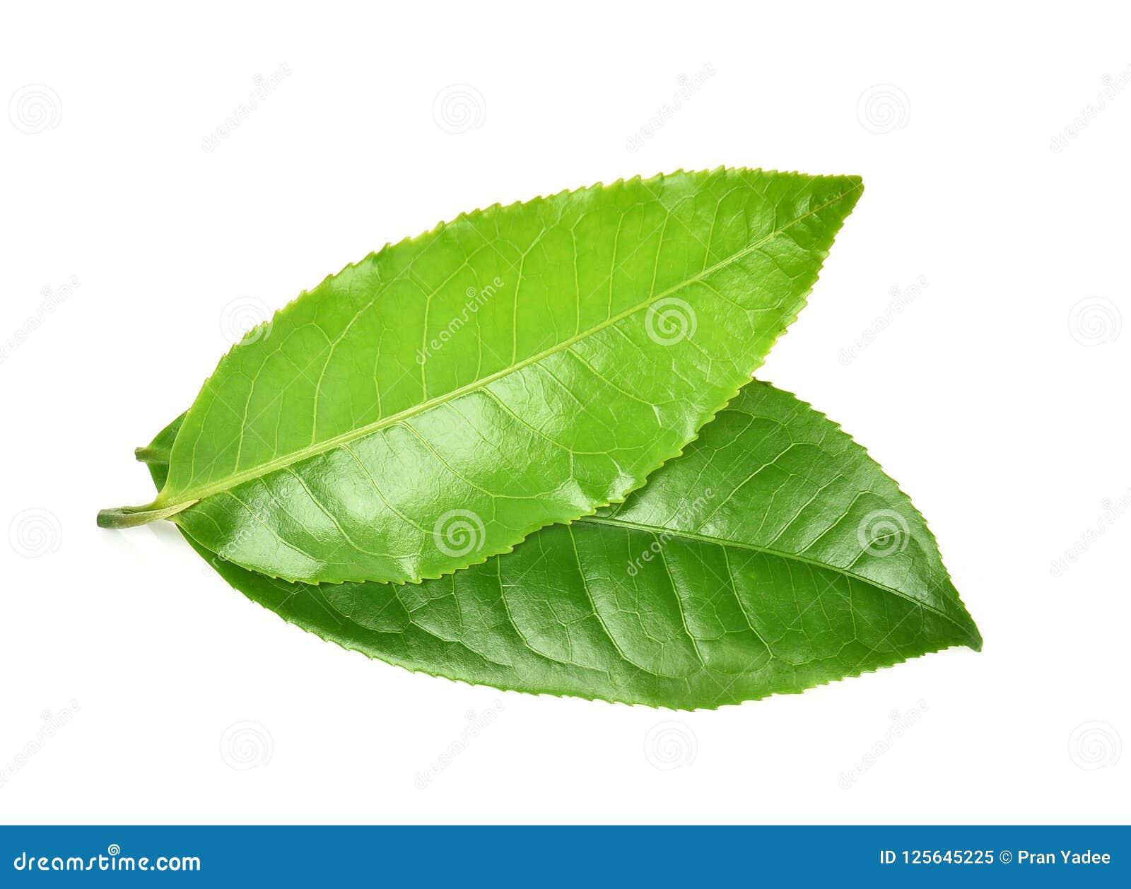 Hoja de té verde aislada en el fondo blanco