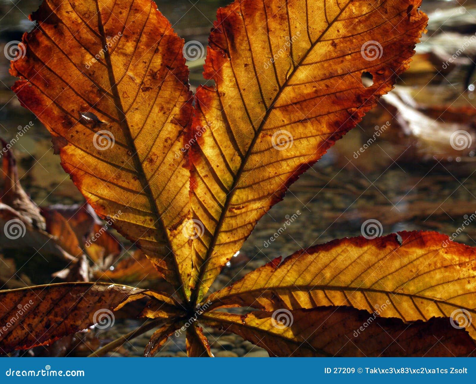 Download Hoja del otoño imagen de archivo. Imagen de hoja, detalle - 27209