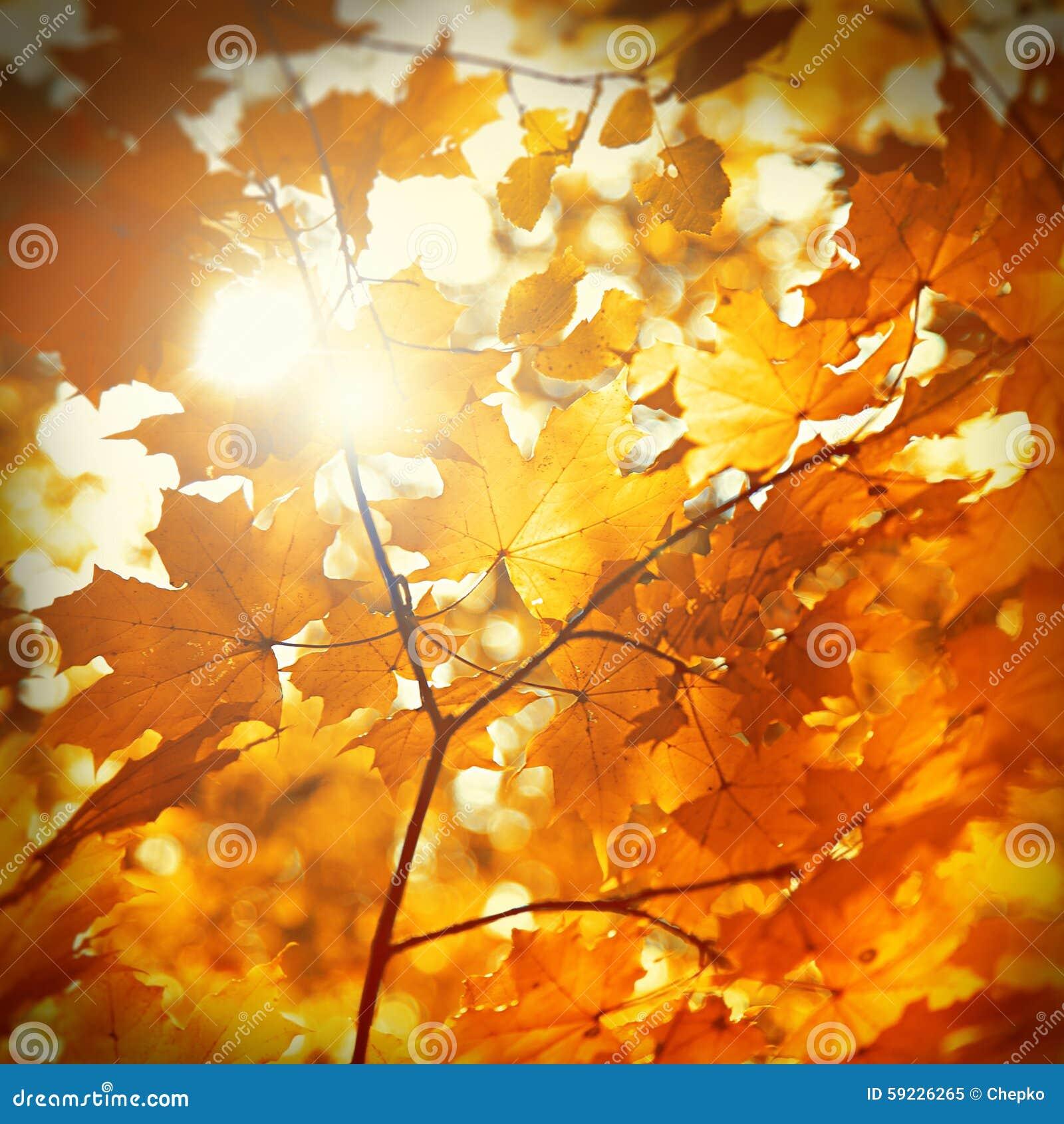 Download Hoja Del Otoño Pegada En Bosque Imagen de archivo - Imagen de imagen, plantas: 59226265