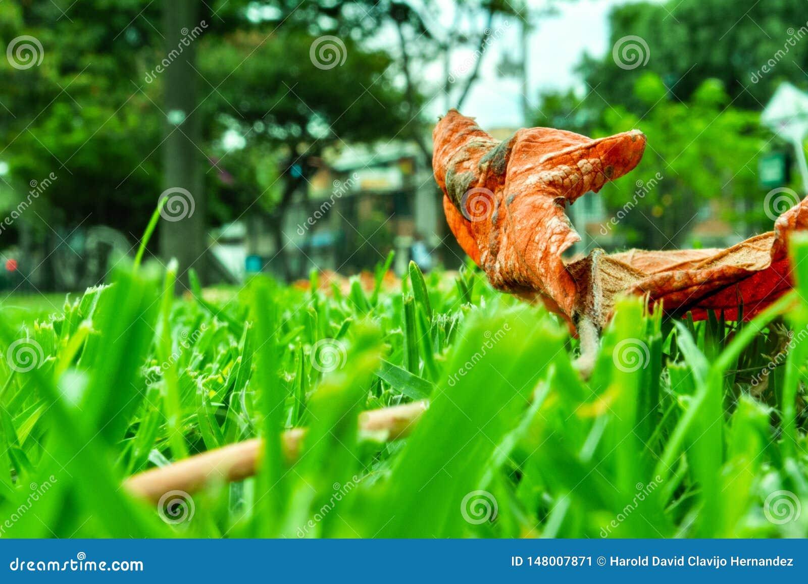 Hoja en la hierba verde