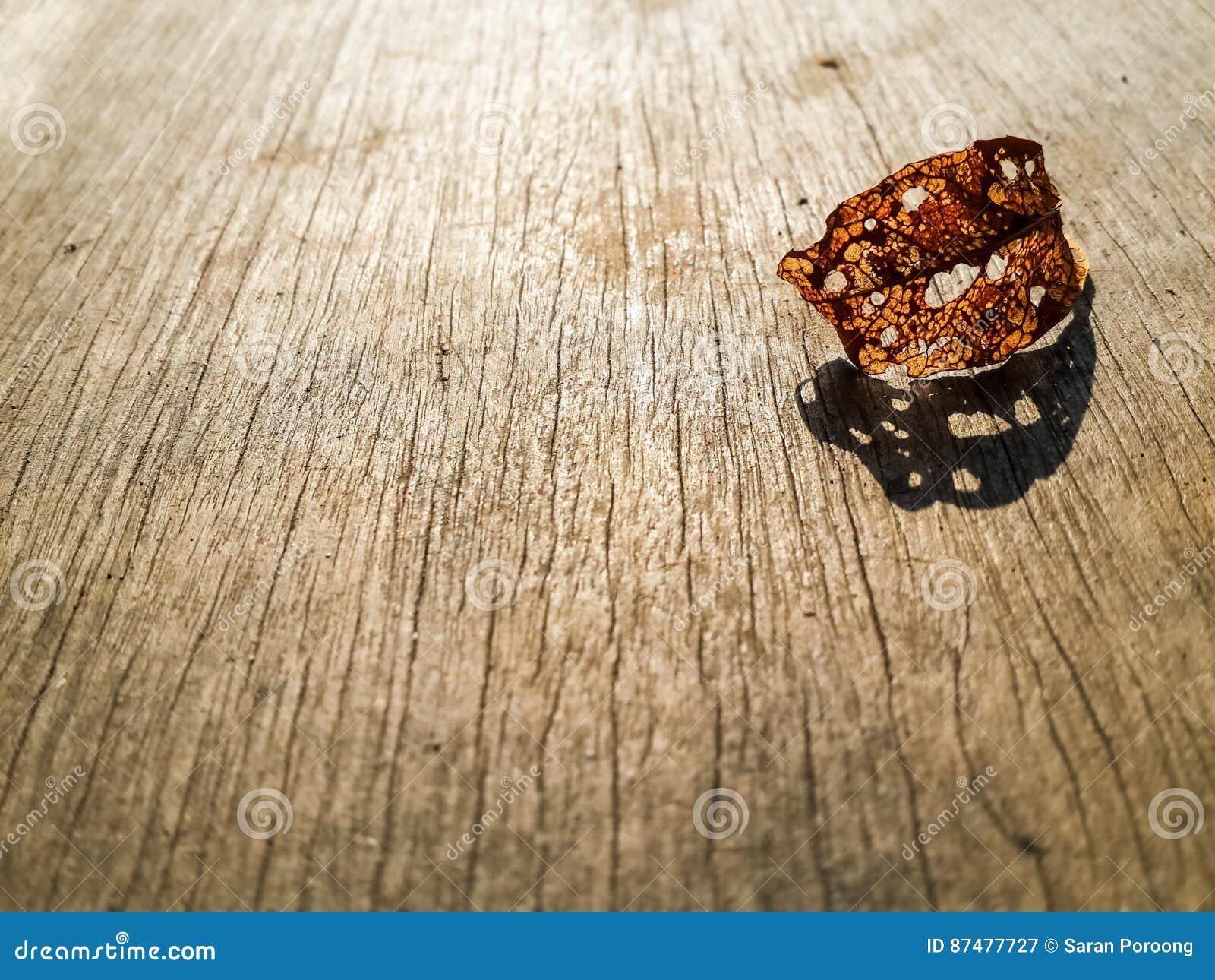 Hoja marrón del decaimiento en el top de madera