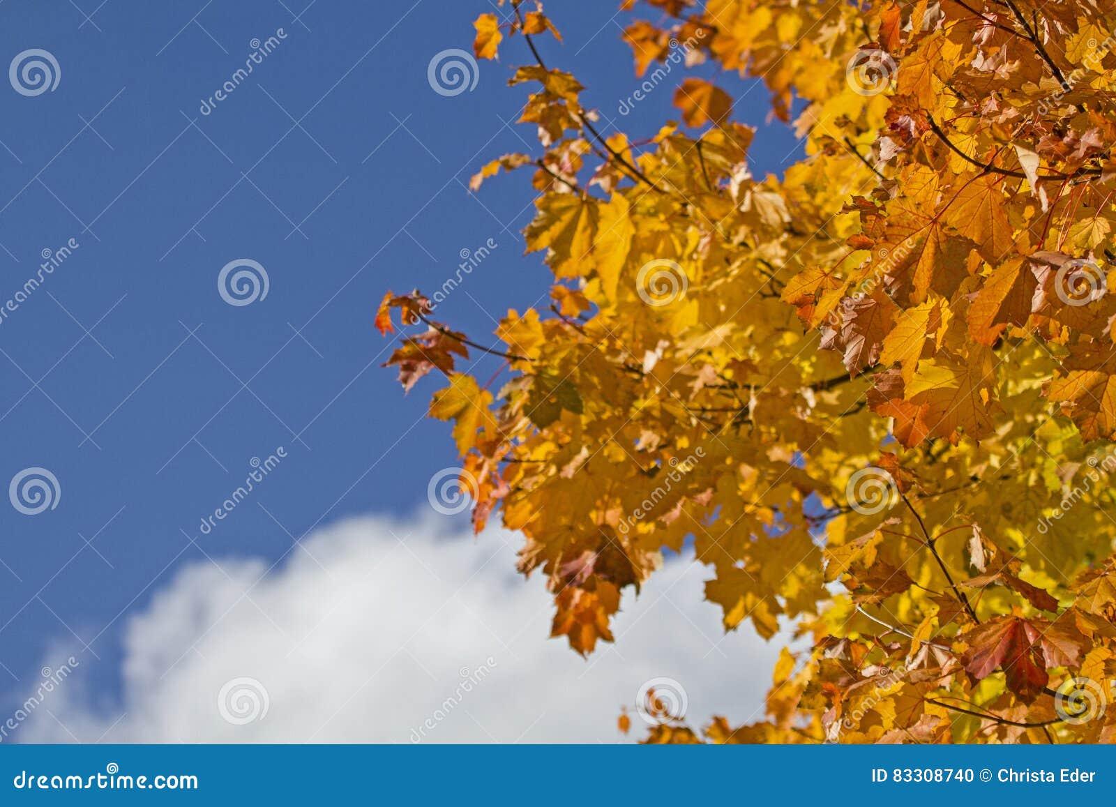 Hoja Que Colorea En Octubre Foto de archivo - Imagen de arce, cielo ...
