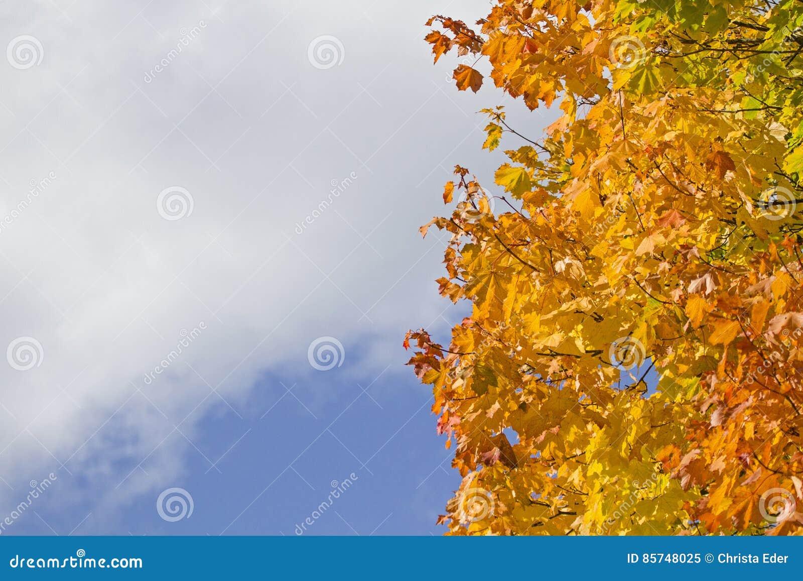Hoja Que Colorea En Octubre Imagen de archivo - Imagen de árbol ...