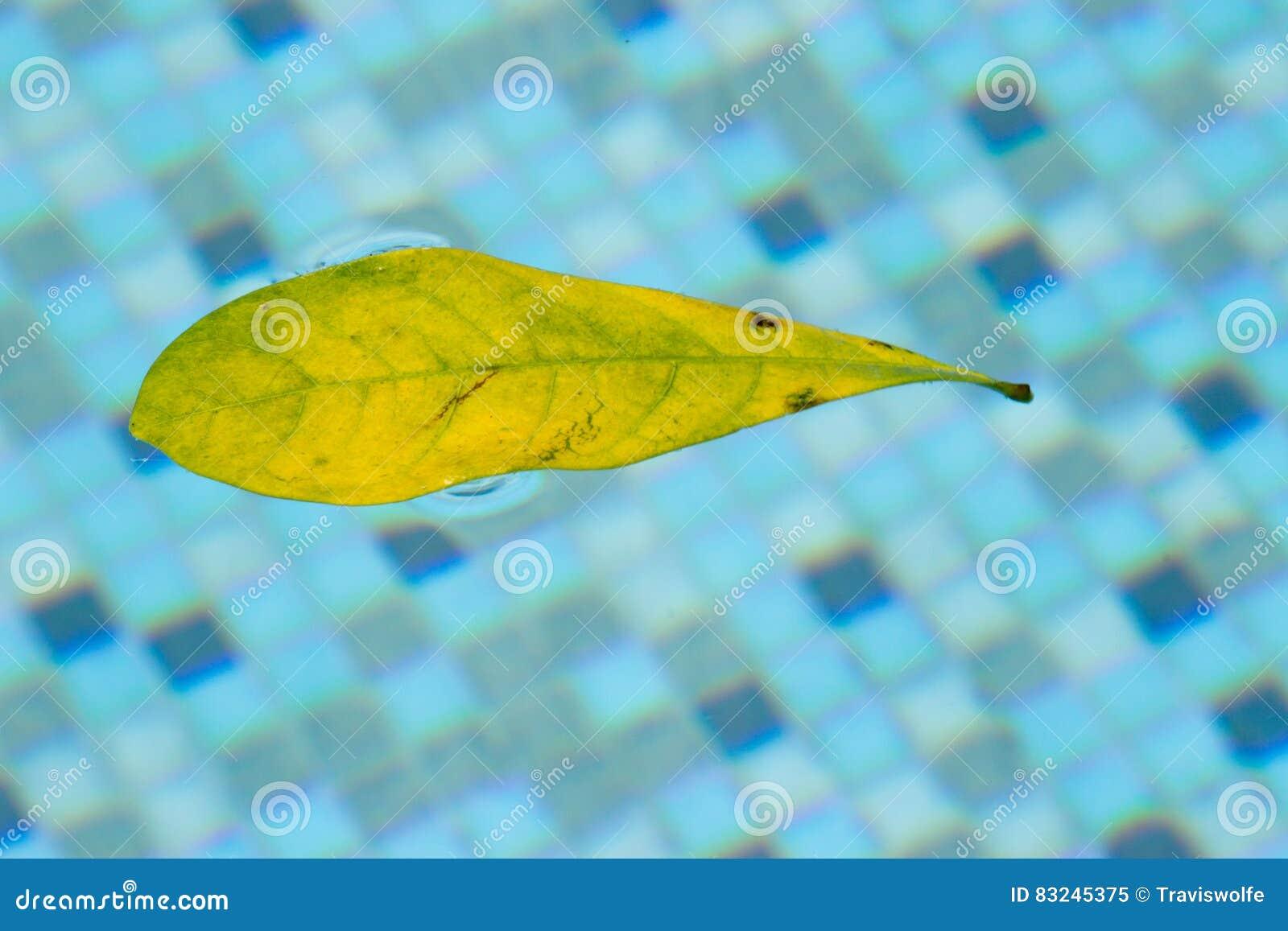 Hoja que flota en piscina, derivando y tirado alrededor en una derecha ingrávida del espacio en la superficie de la piscina Este