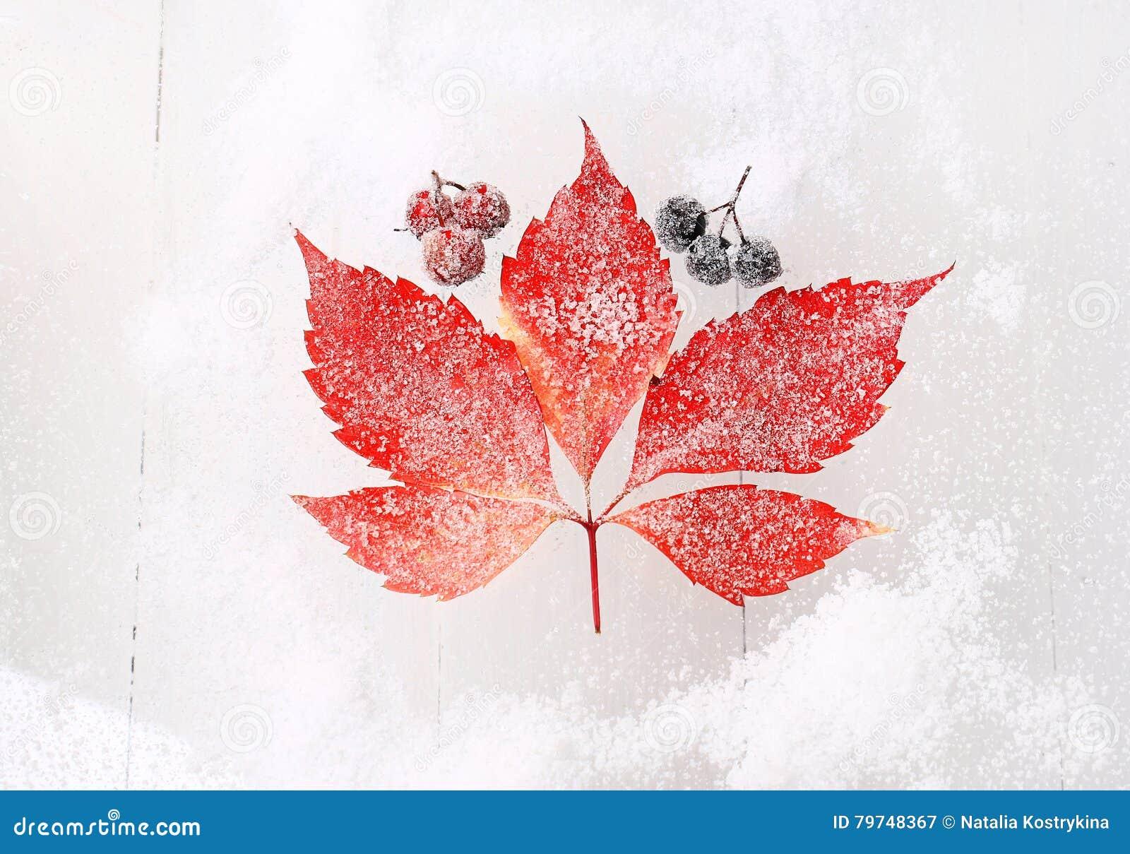 Hoja roja en un fondo nevoso