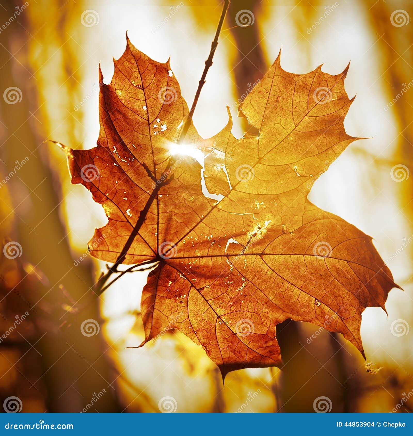 Hoja seca del otoño
