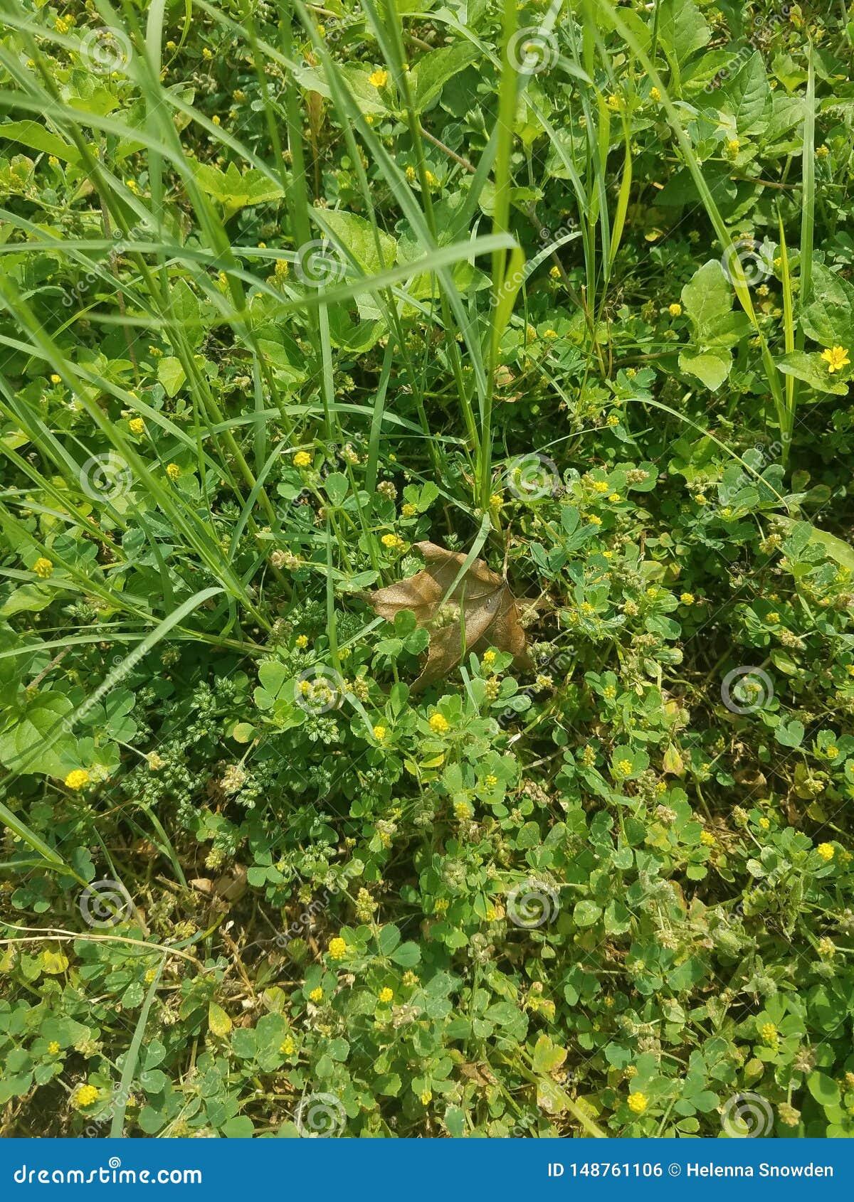 Hoja seca del oto?o en prado verde del verano