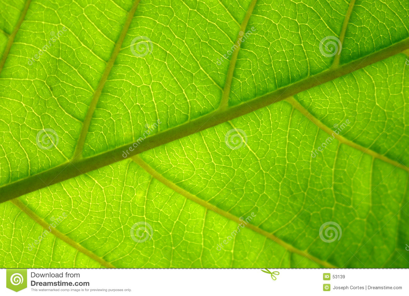 Hoja verde