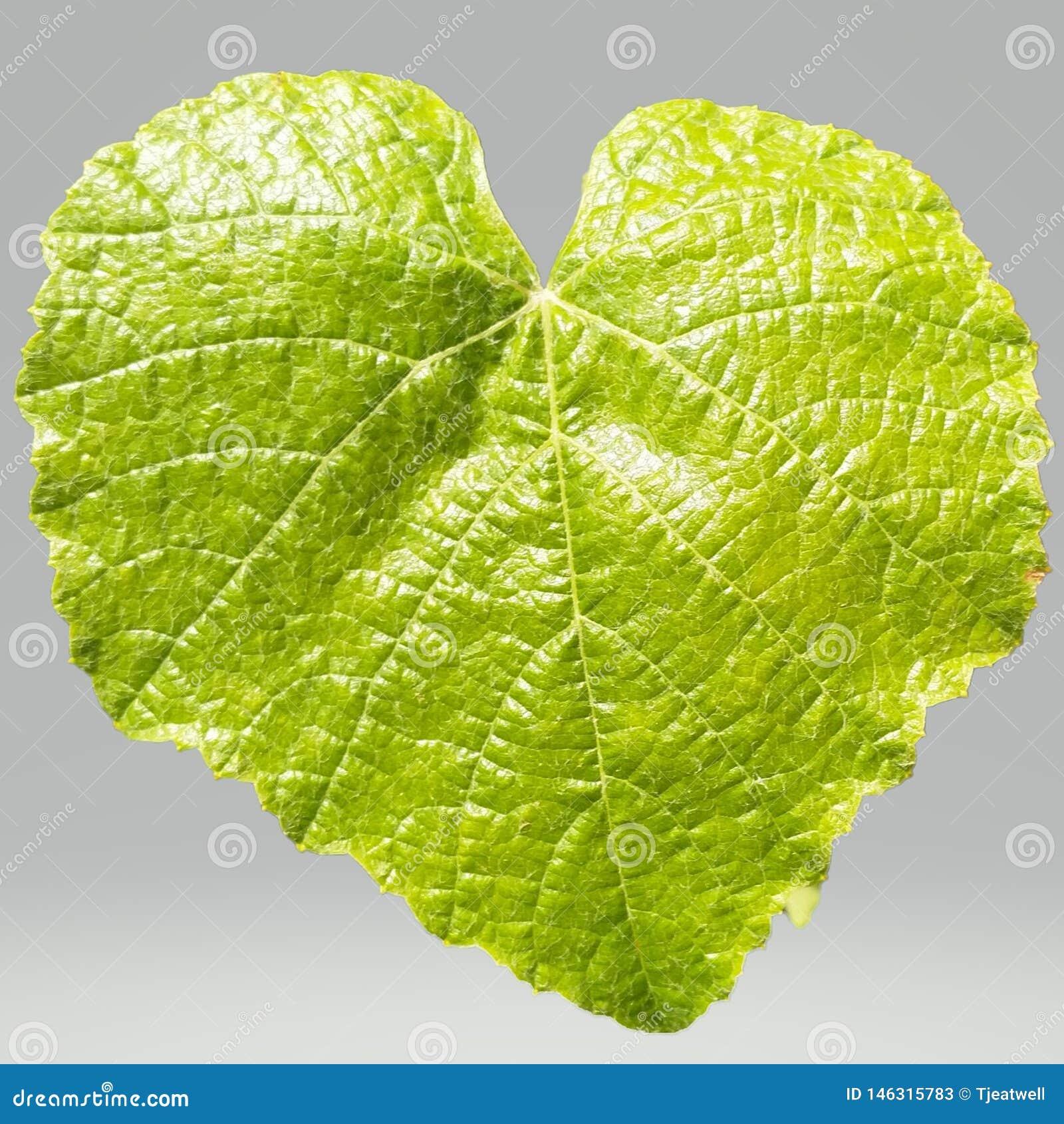 Hoja verde en un fondo transparente