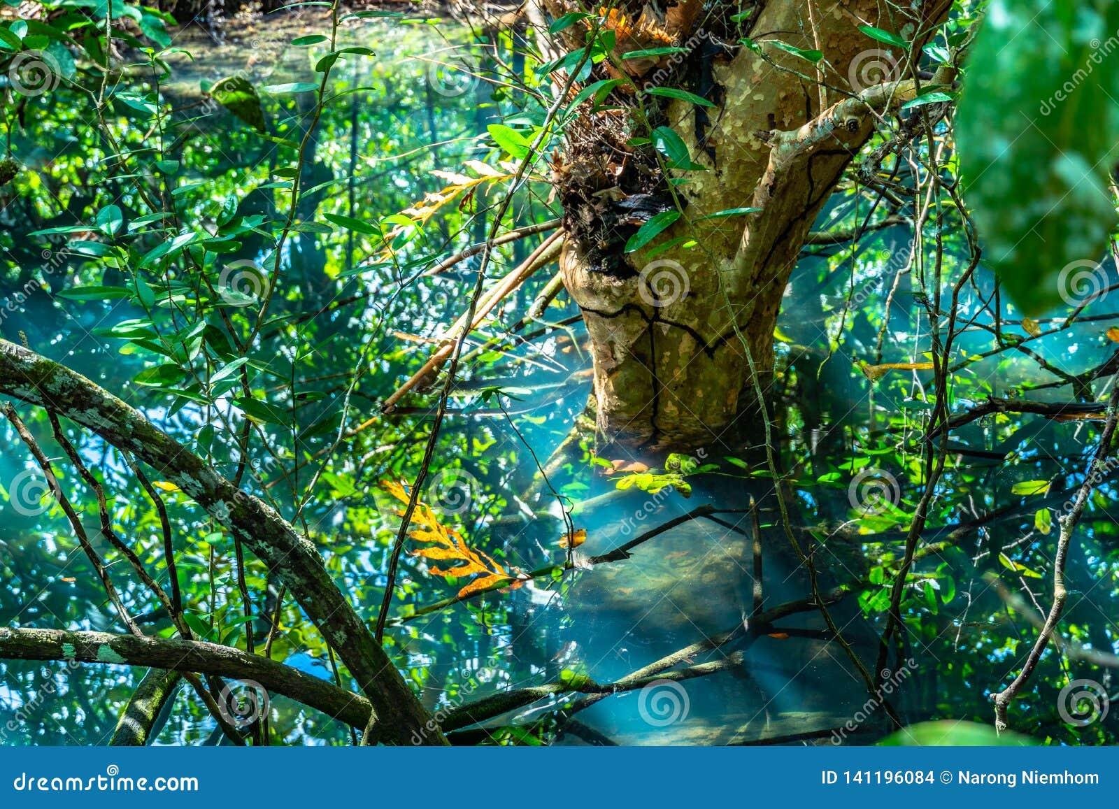 Hoja verde en un pantano completo