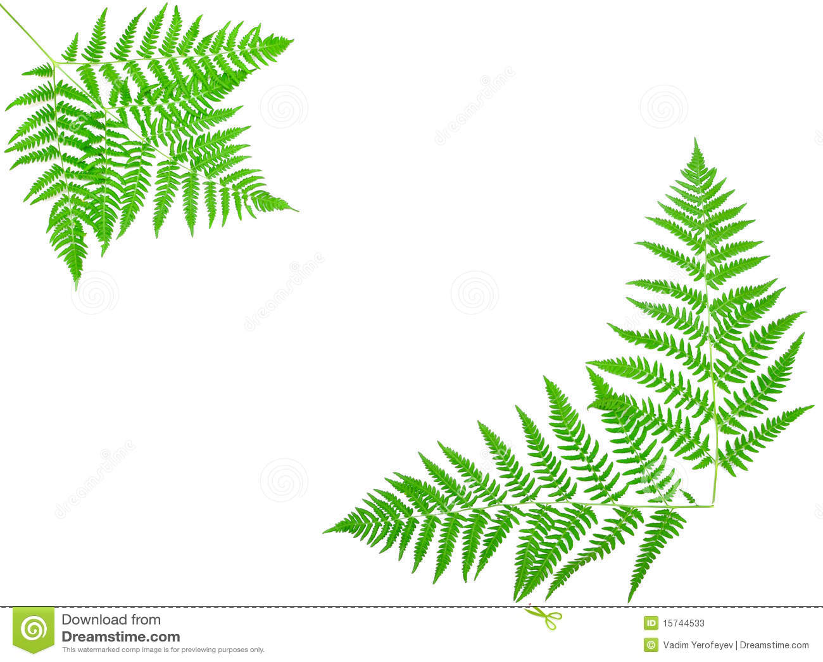 Hoja Verde Joven Del Helecho Imagen de archivo - Imagen de planta ...