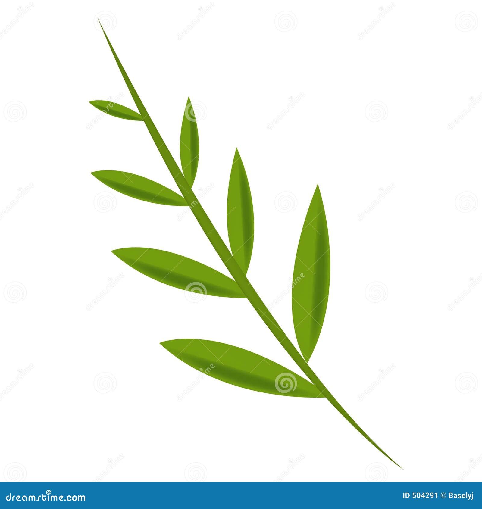 Hoja verde oliva