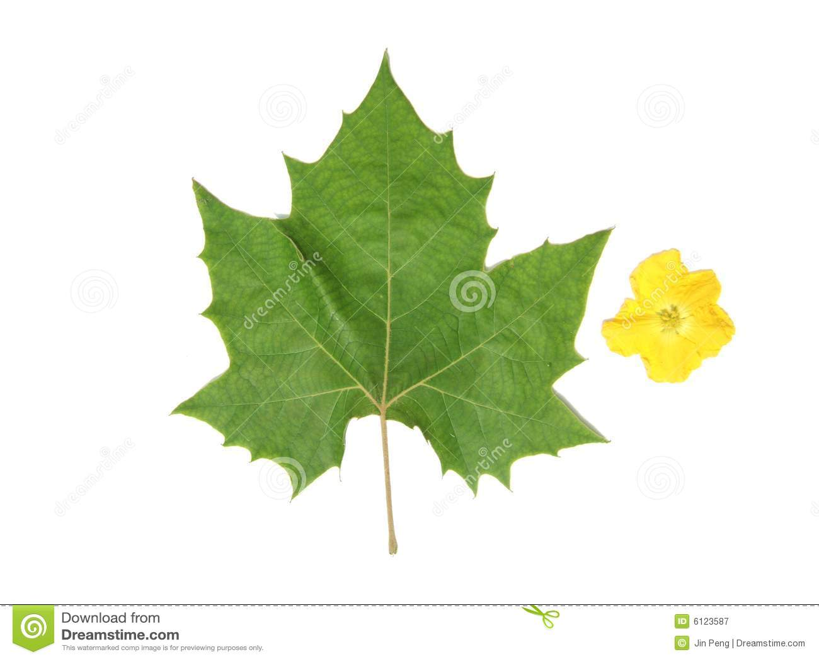 Hoja verde y flor amarilla