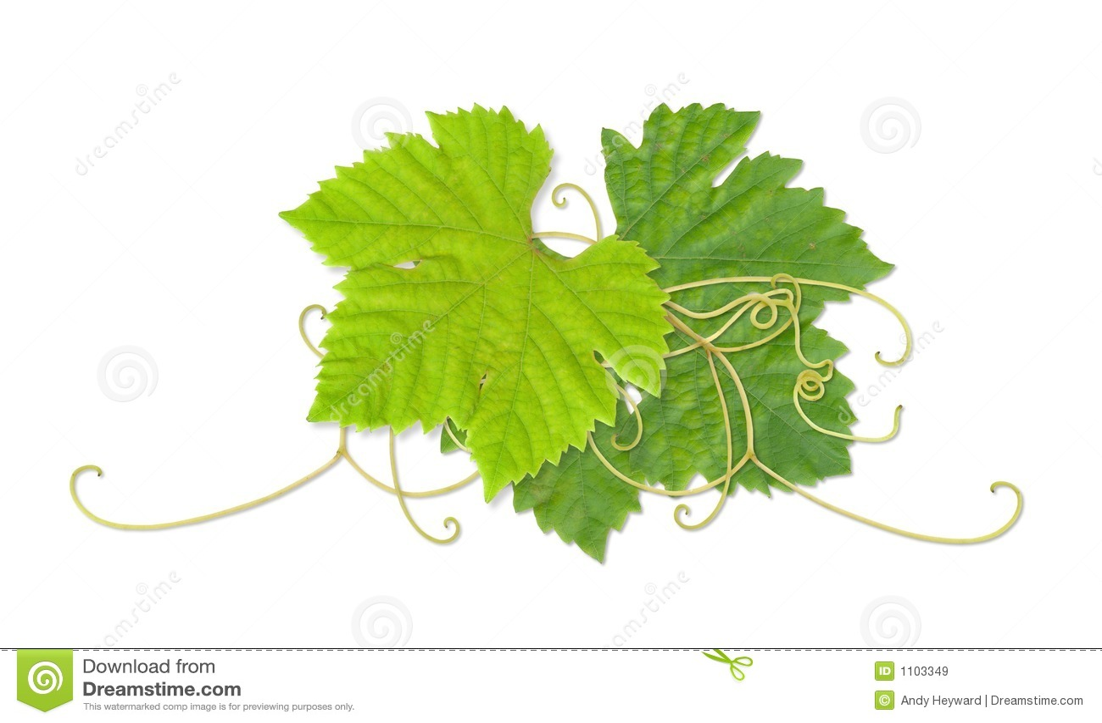 Hojas 03 de la uva