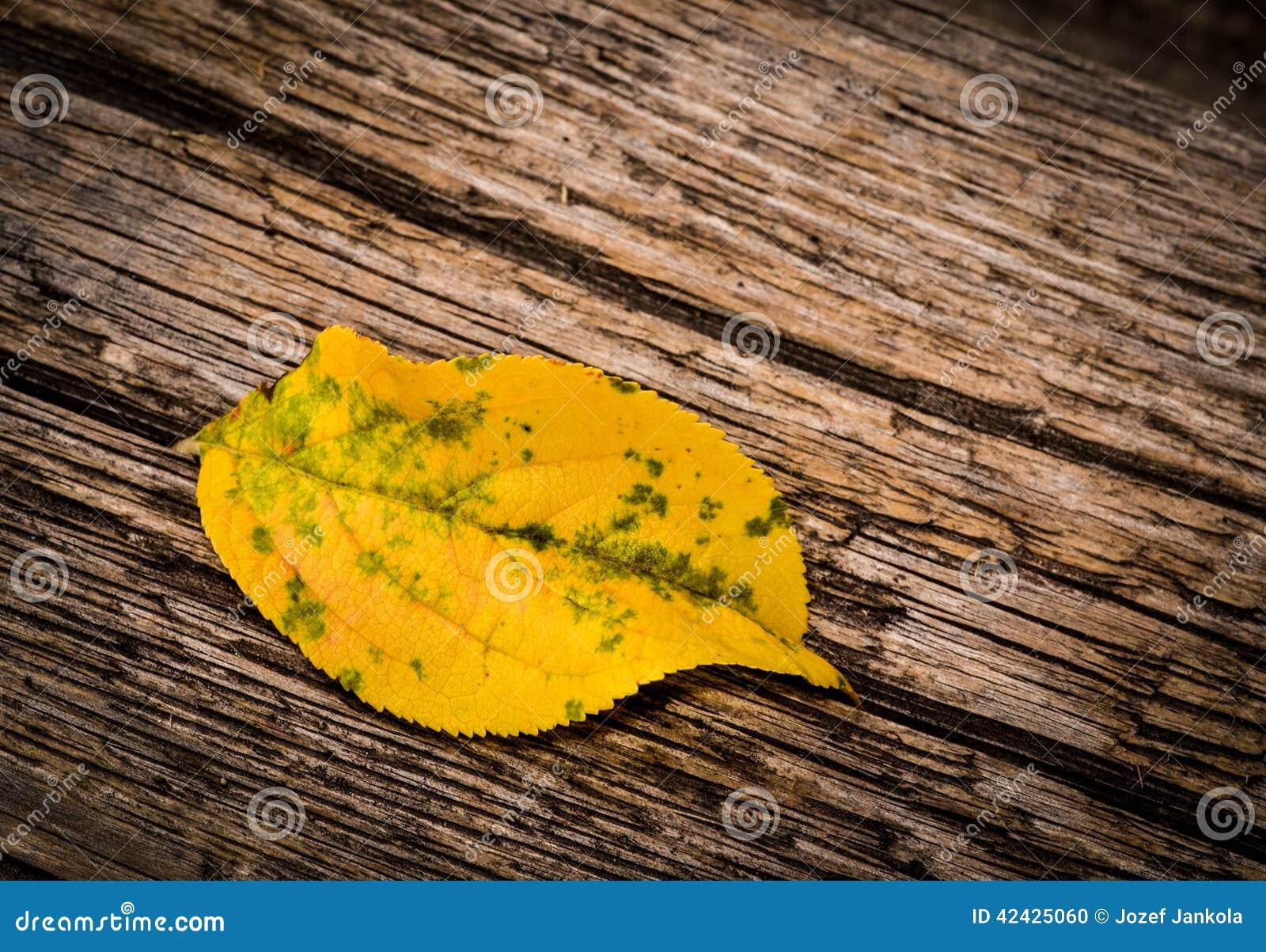 Hojas amarillas de un otoño