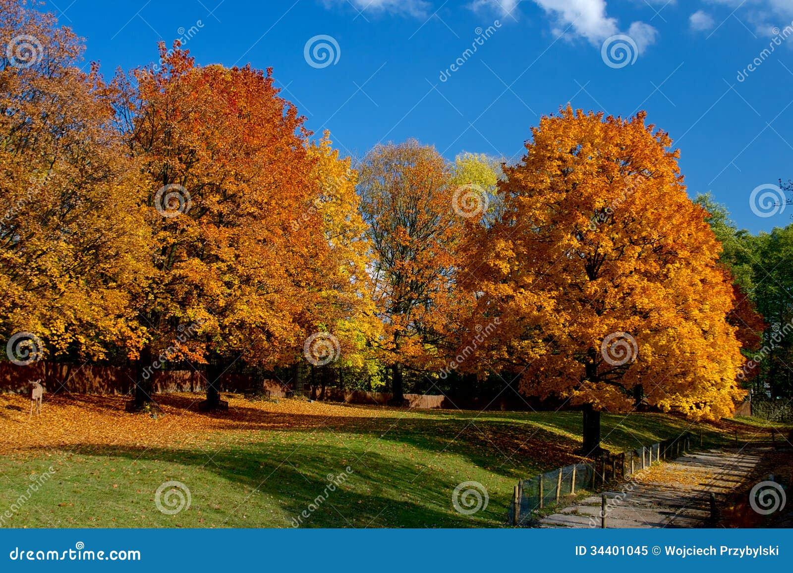 Hojas Amarillas Y Rojas En árboles En El Otoño, Octubre Imagen de ...