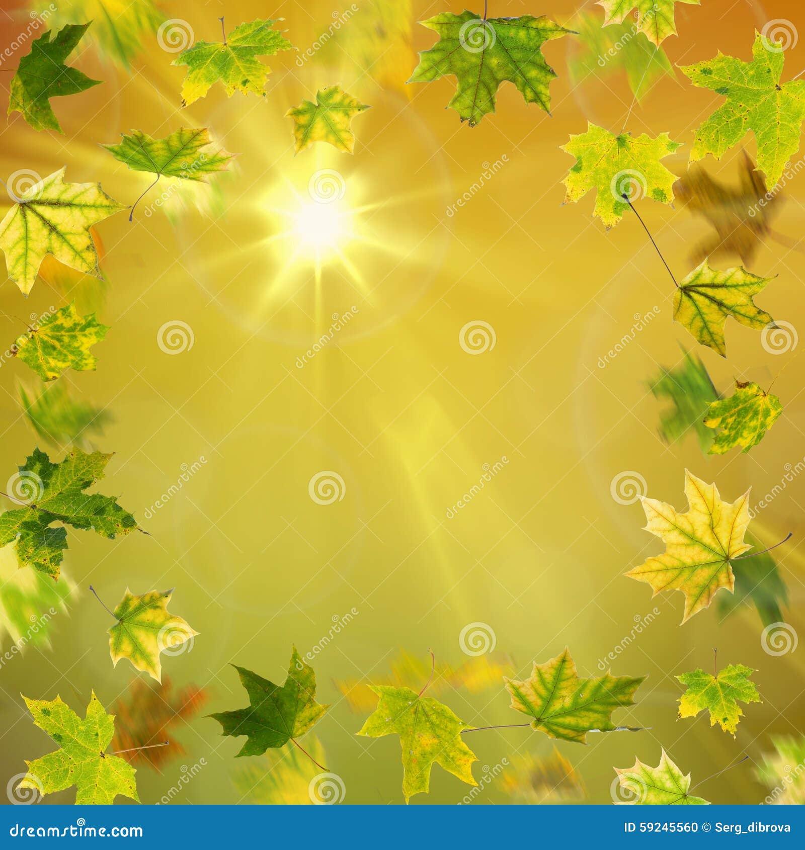Download Hojas De Arce Verdes Del Otoño Stock de ilustración - Ilustración de bosque, diseño: 59245560