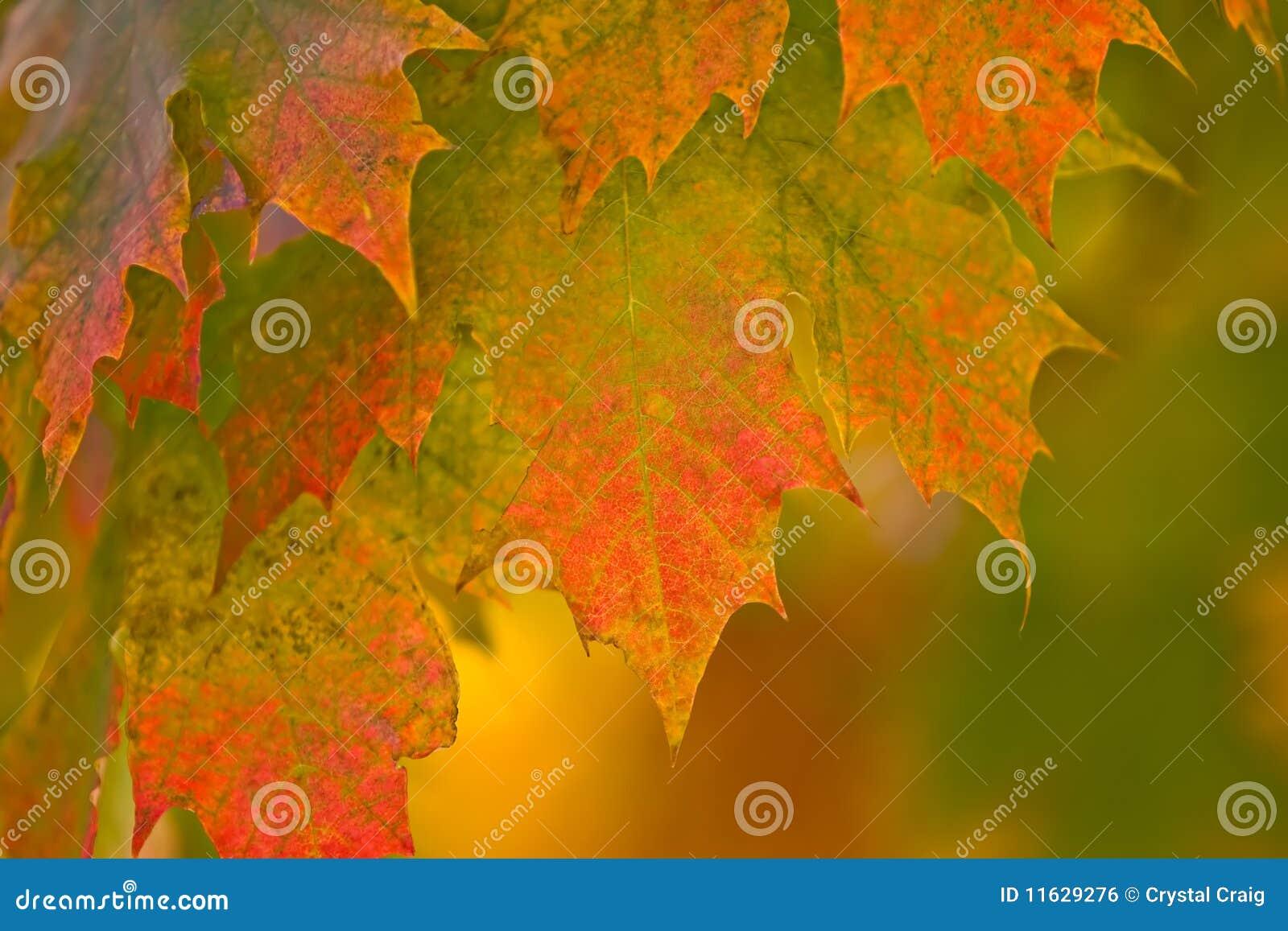 Hojas de la caída del otoño