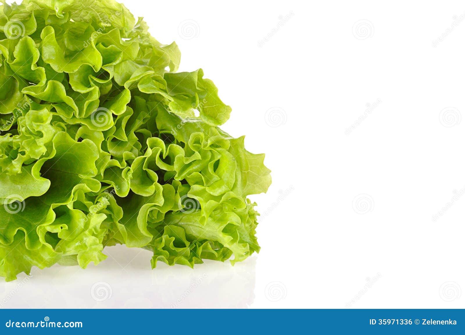 Hojas de la ensalada verde aisladas en un fondo blanco