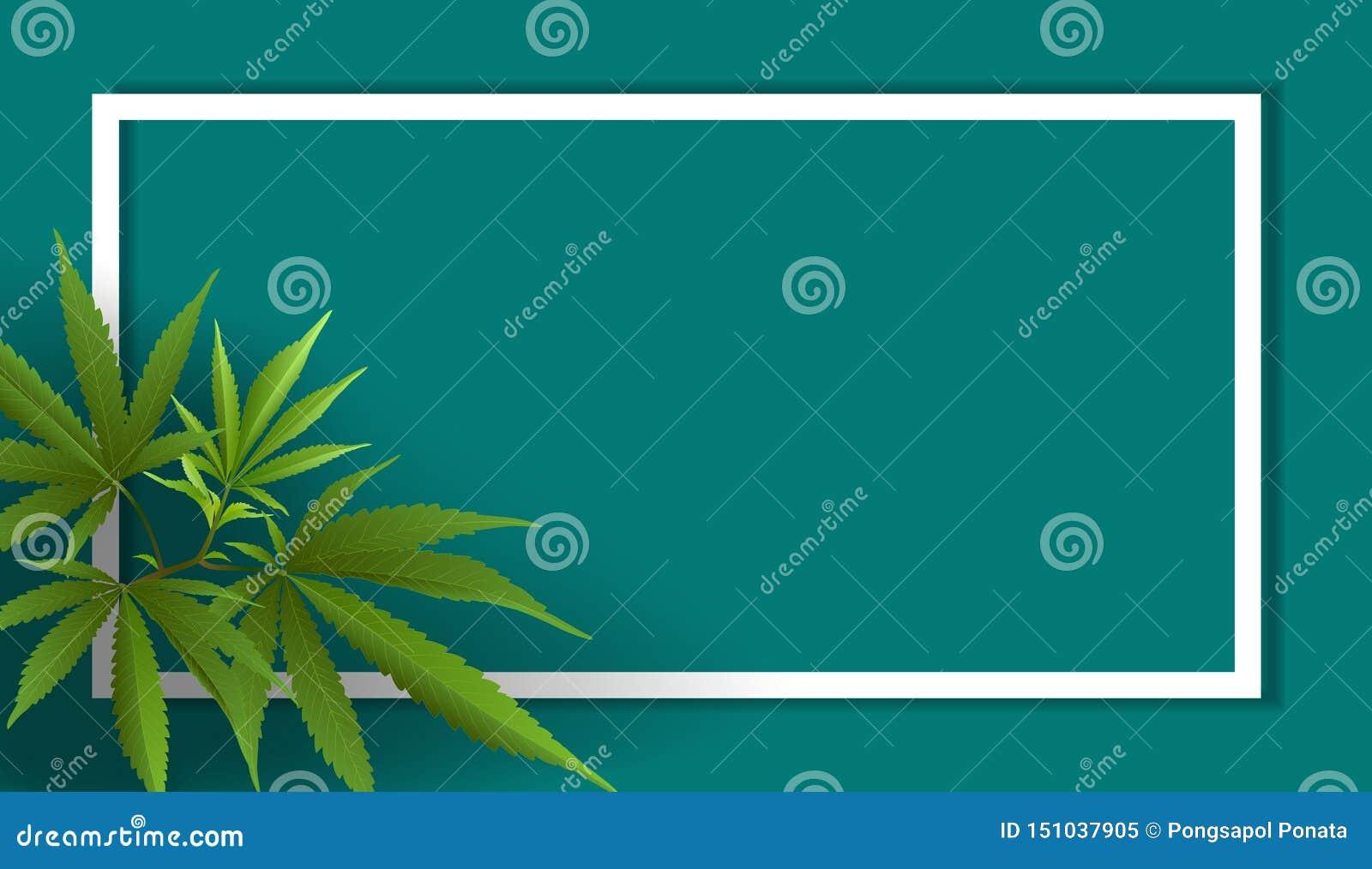 Hojas de la marijuana, cáñamo en fondos azules