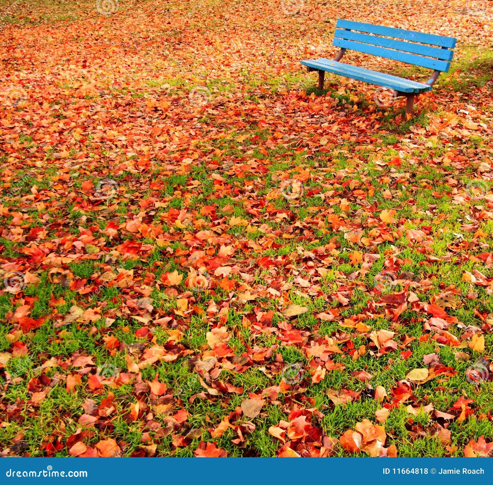 Hojas de otoño del parque del banco