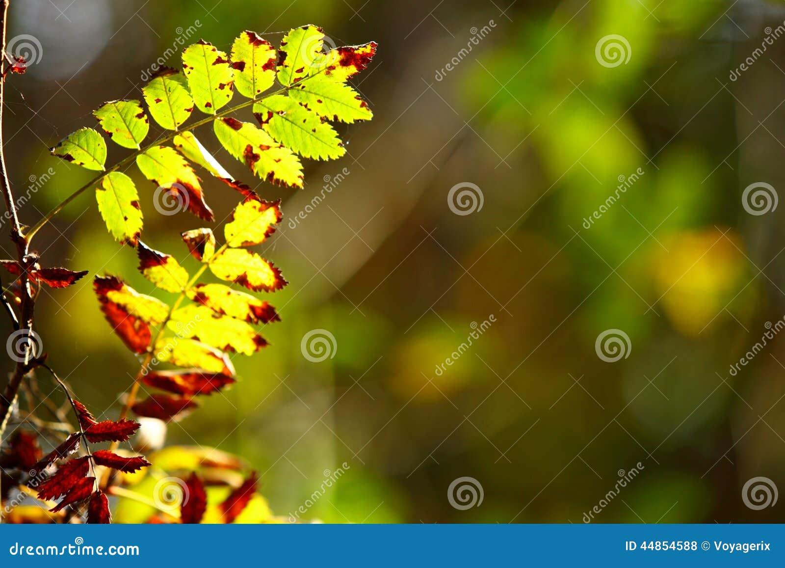 Hojas de otoño en fondo borroso bosque