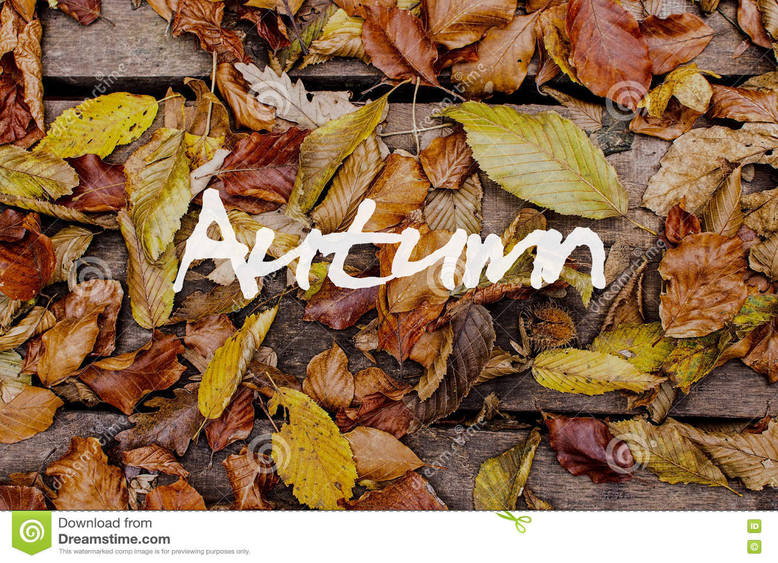 Hojas de otoño en fondo de madera Autumn Concept Wallpaper