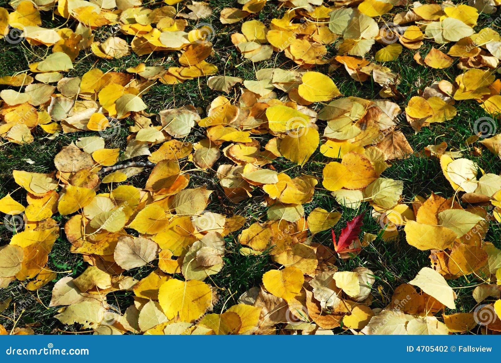 Hojas de otoño en hierba