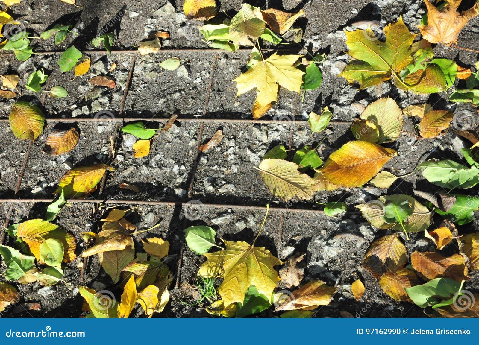 Hojas de otoño en la tierra en la rejilla
