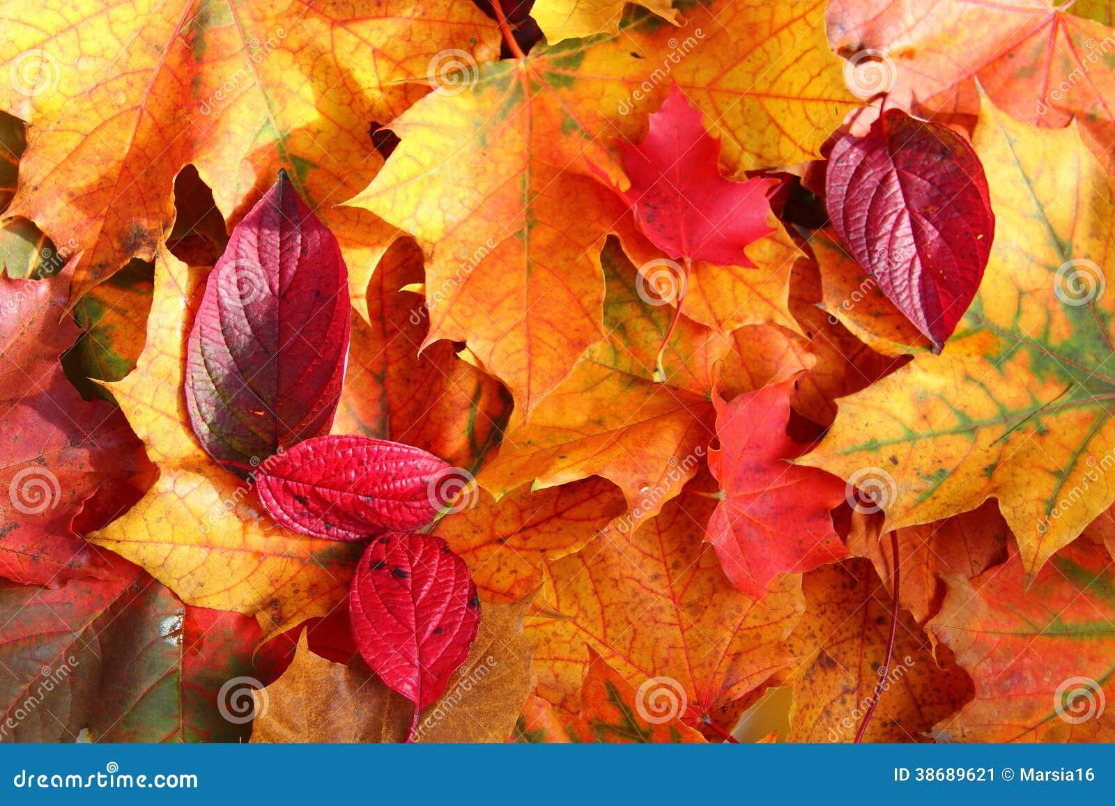 Hojas de otoño en luz del sol