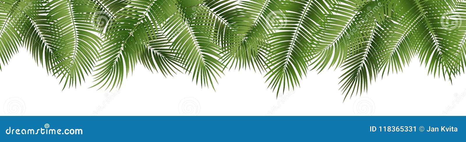 Hojas de palma inconsútiles del verano del vector en el fondo blanco