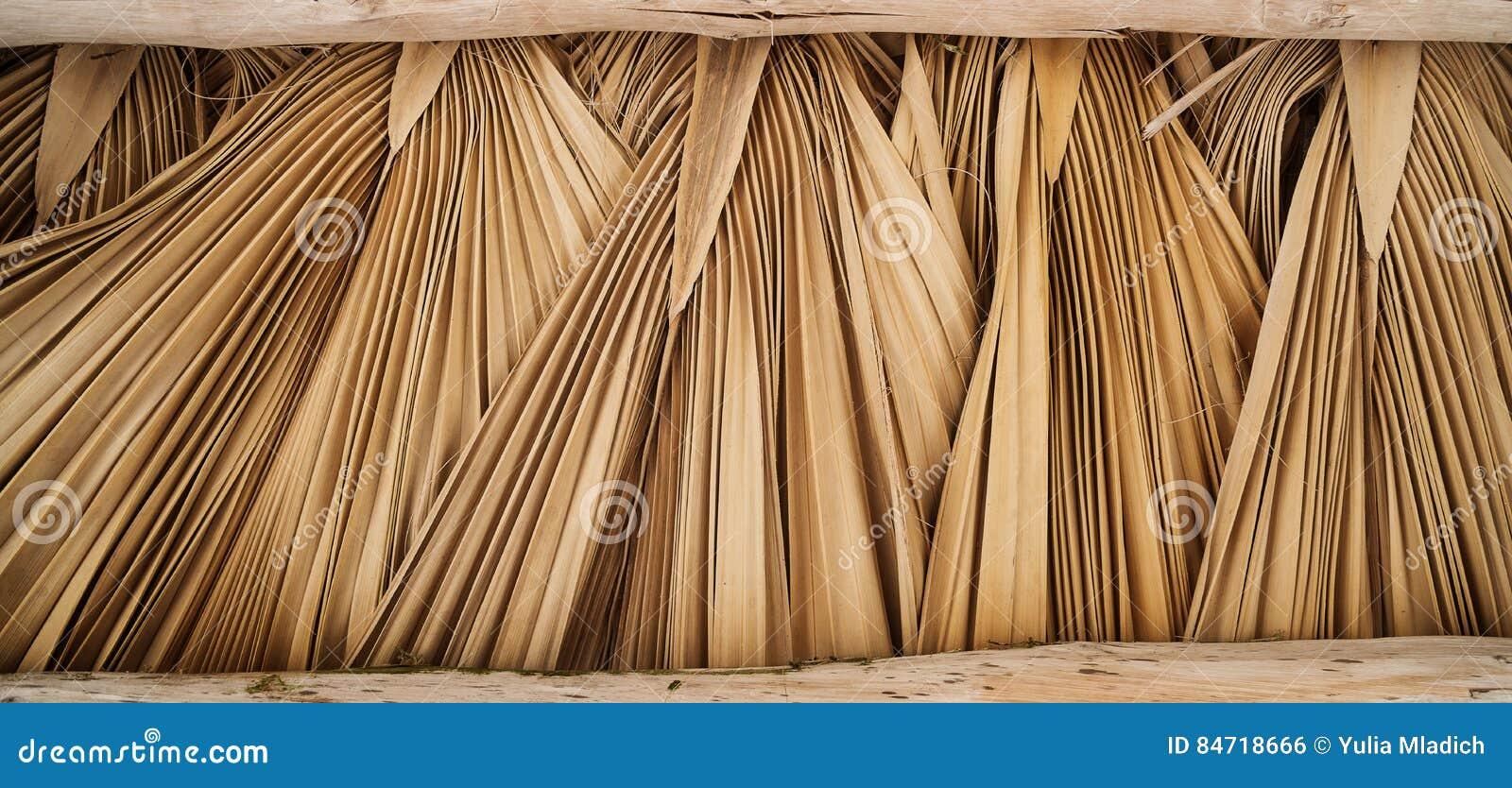 Fotos de palmas secas 68