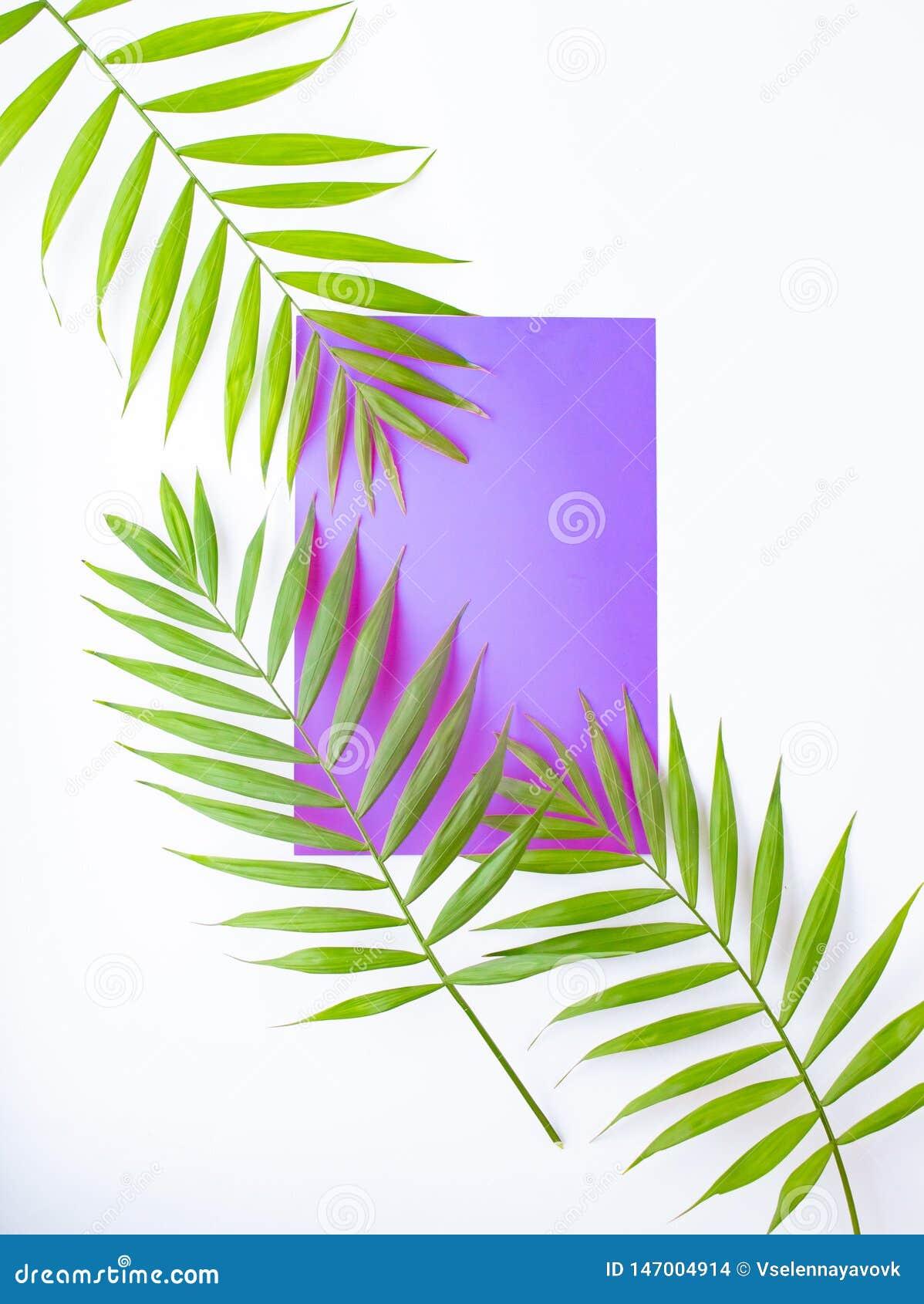 Hojas de palma tropicales en lila y fondo p?rpura Concepto m?nimo Verano en estilo Hoja de palma Plantas tropicales Endecha plana