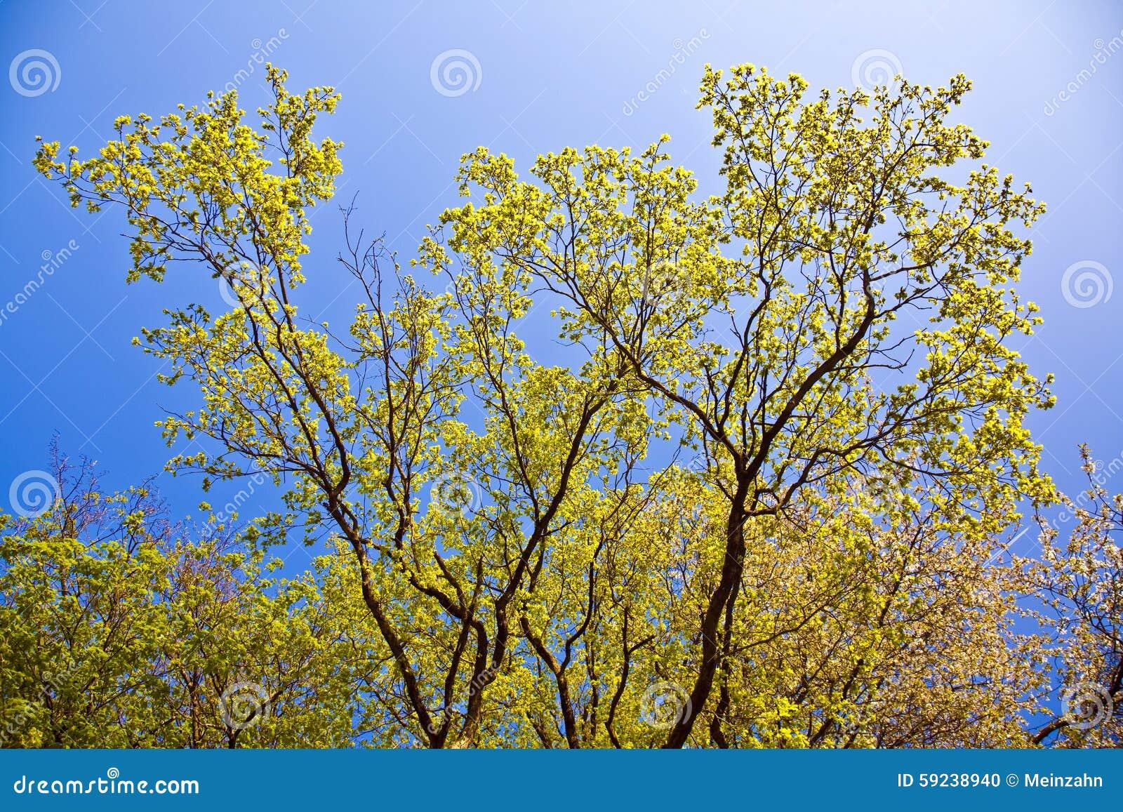 Hojas de un árbol en luz intensiva