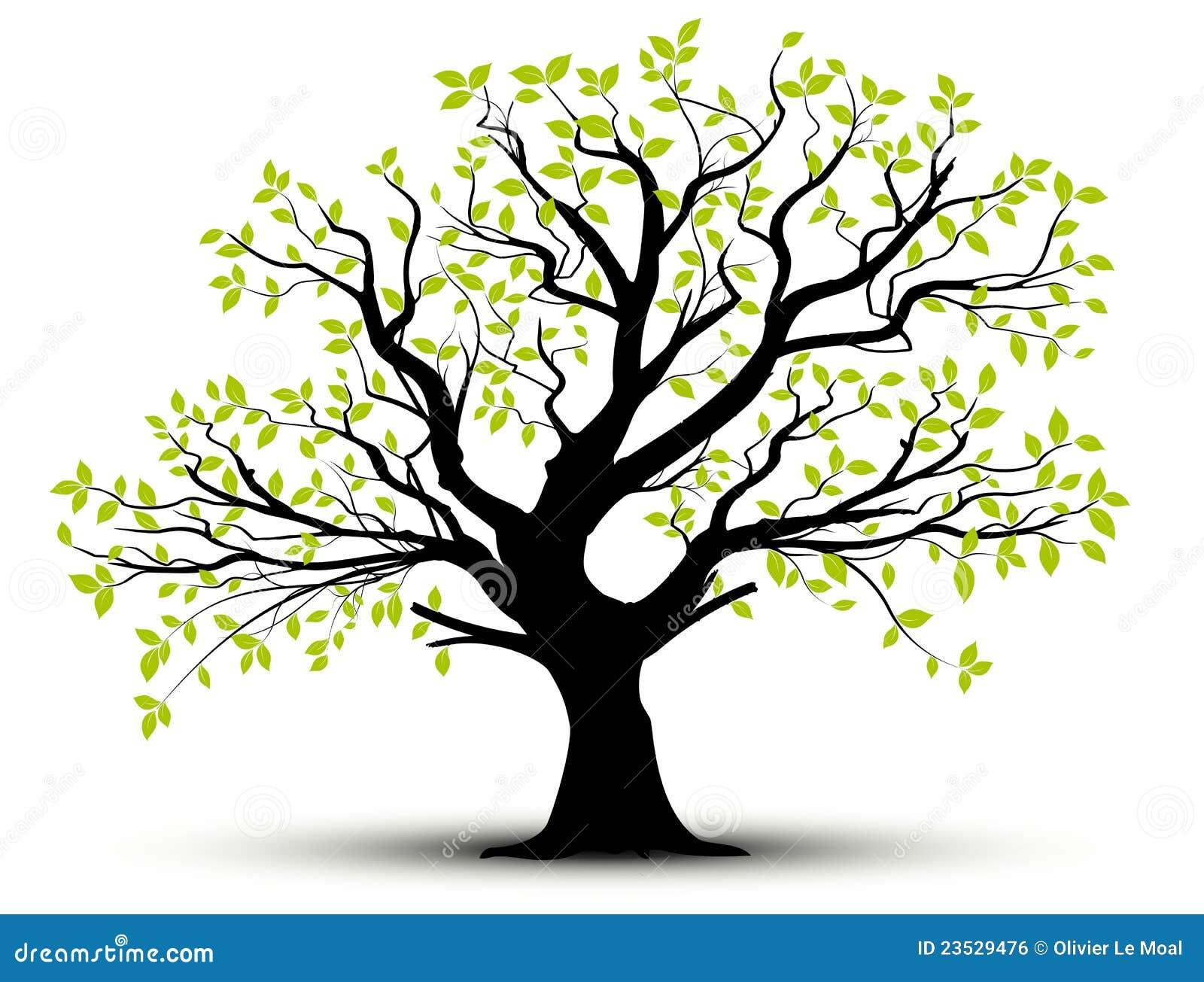 Hojas decorativas del árbol y del verde del vector