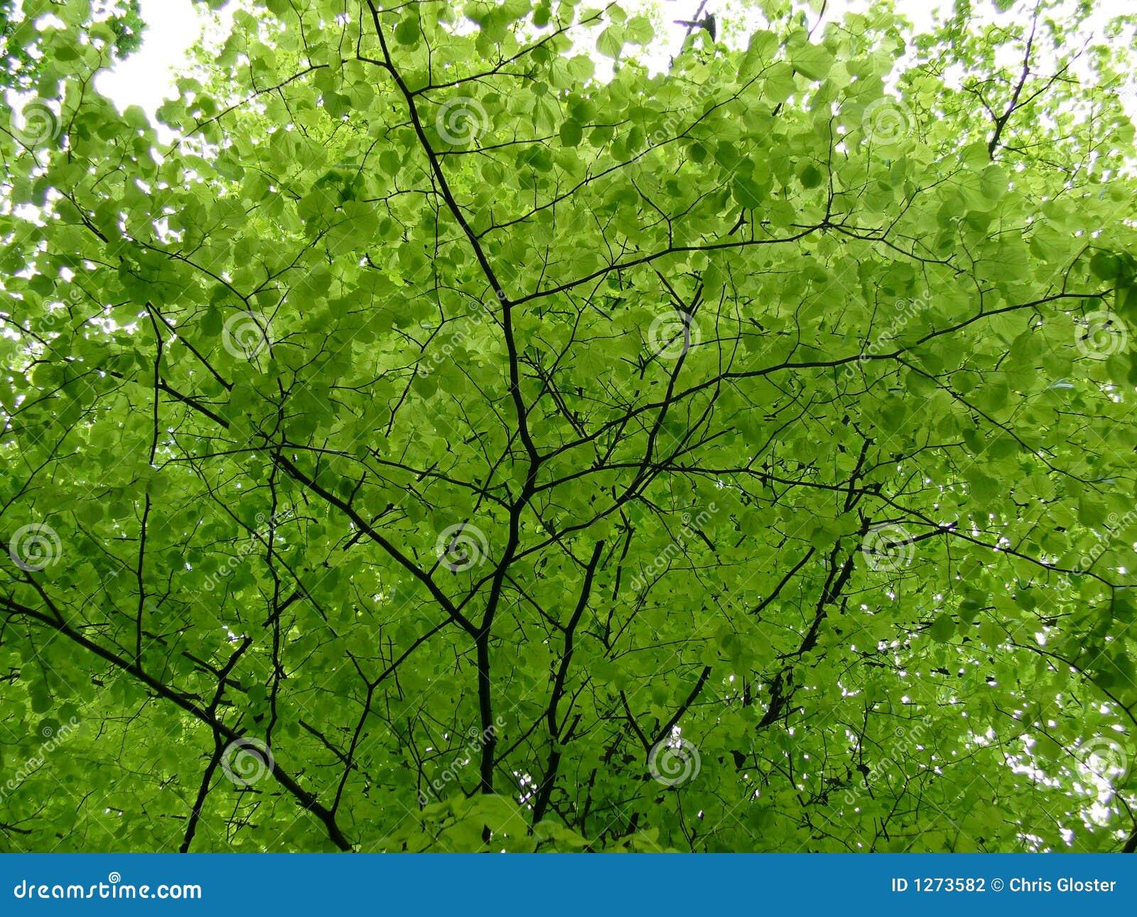 Hojas del árbol