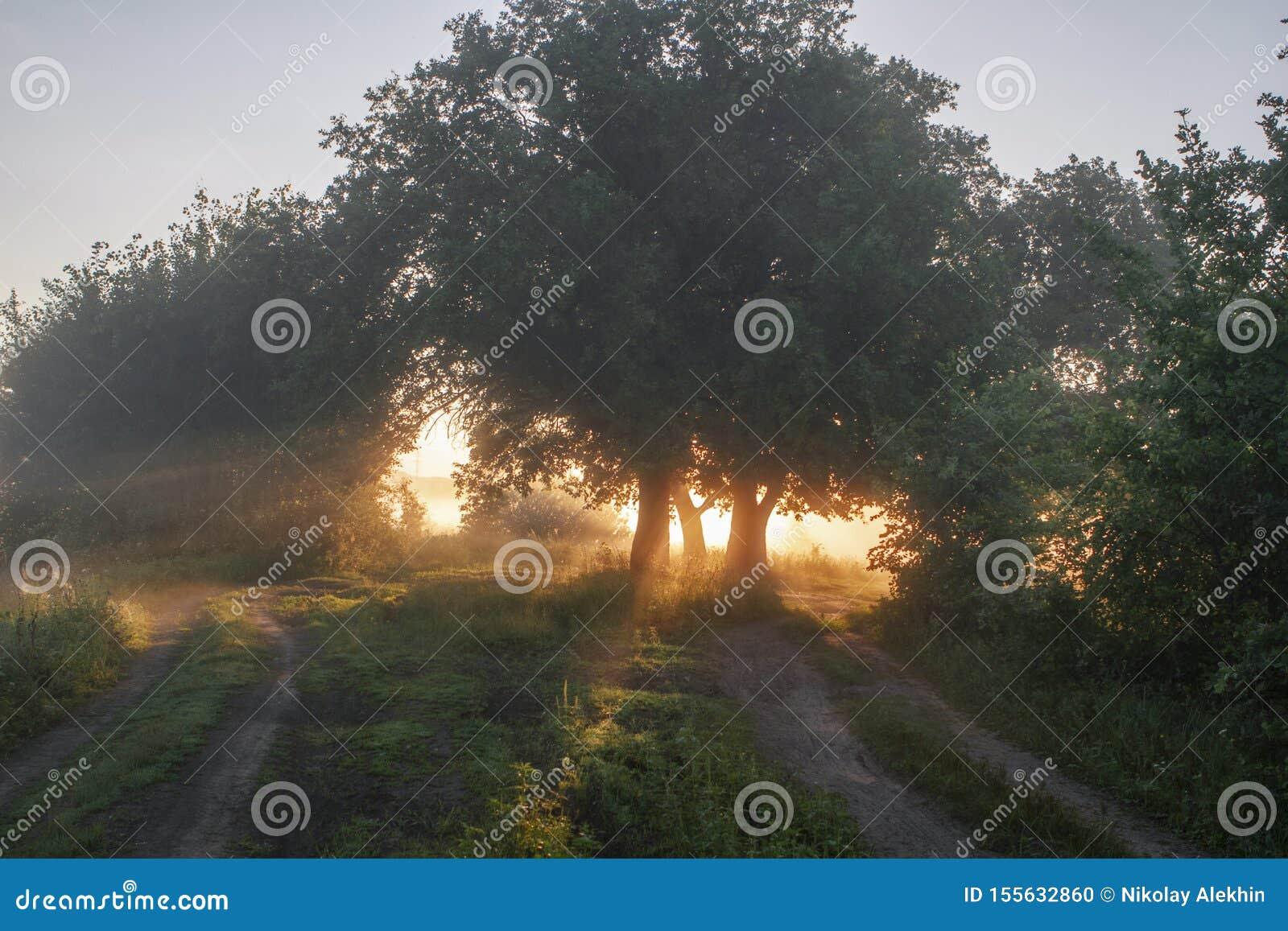 Hojas del roble en la luz de la mañana con luz del sol Salida del sol en el campo