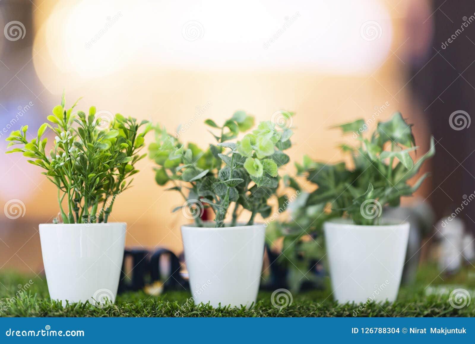 Hojas del verde colocadas en los potes blancos