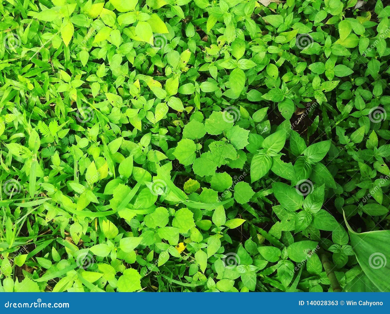 Hojas del verde en el jardín